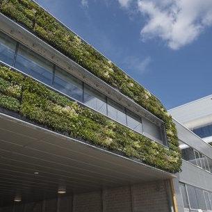 Outdoor Green Wall at Nike's European Logistics Campus in Laakdal, Belgium