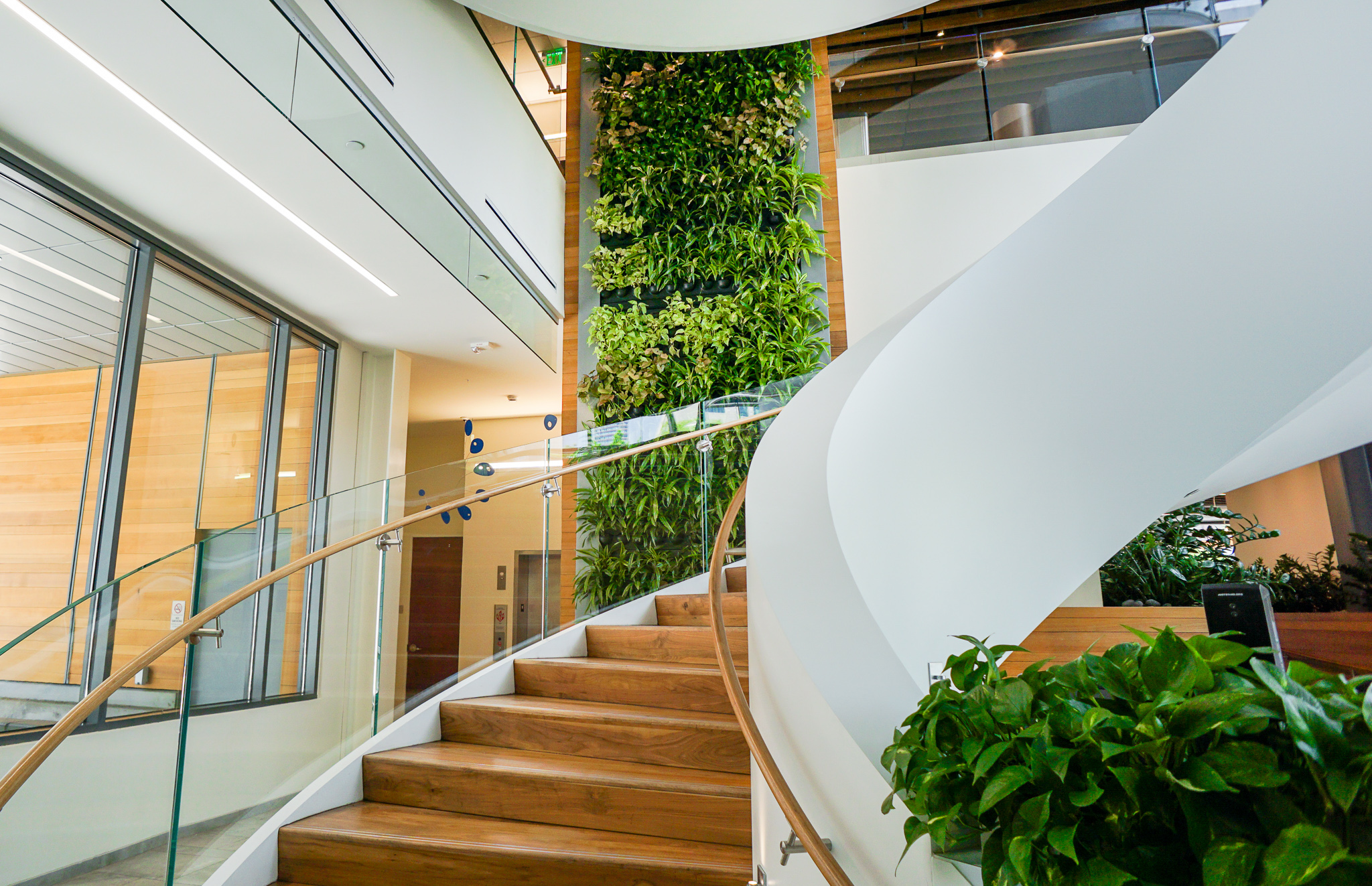 Colorado Health Foundation - Live Panel Green Wall by Suite Plants
