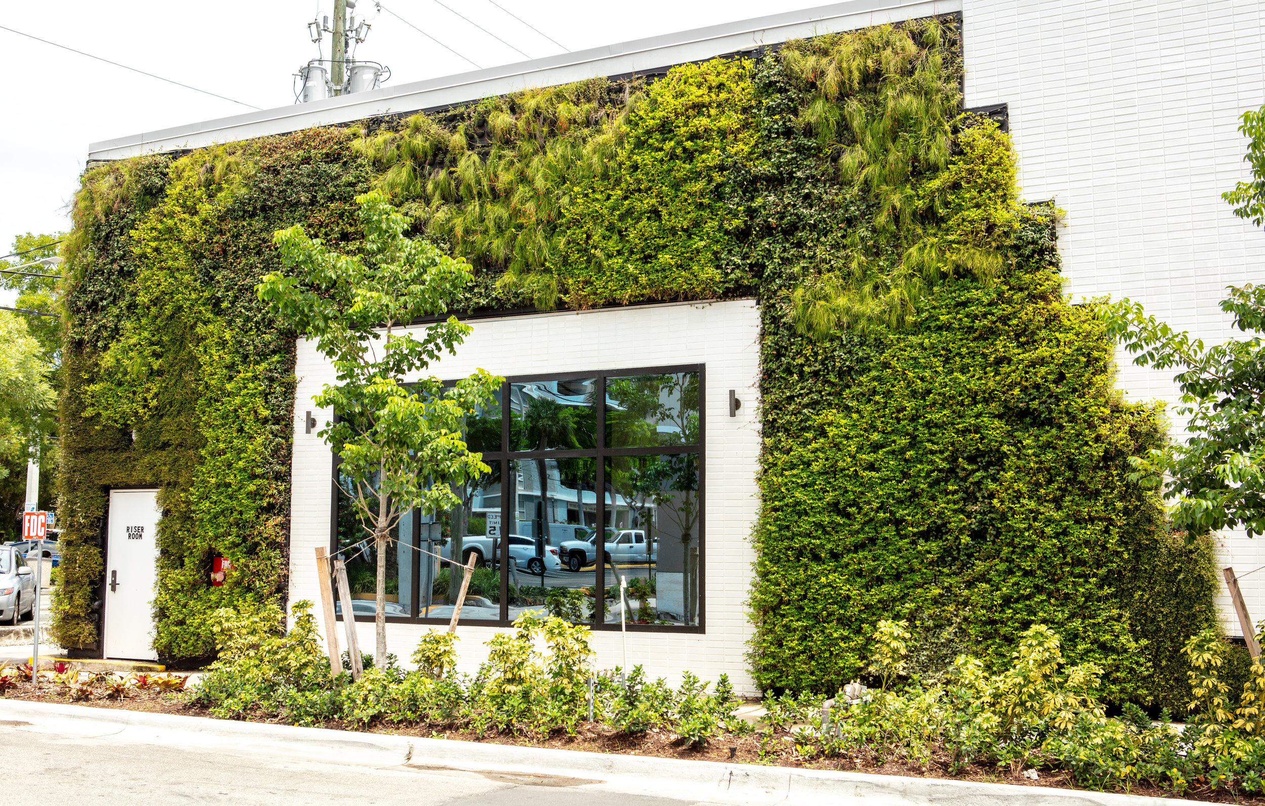 Las Olas Capital One Café - Living Wall by Suite Plants