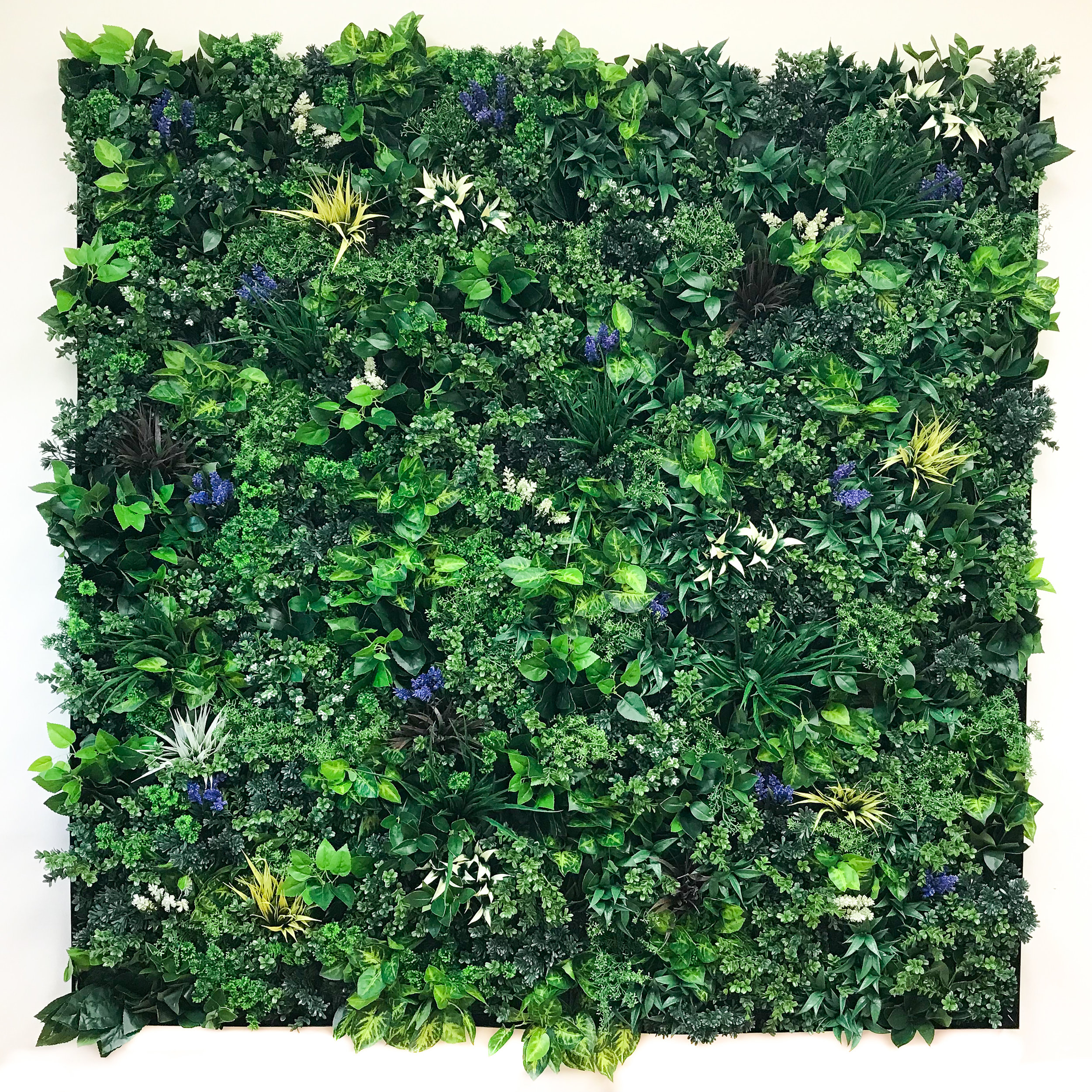 Leafy ALW Panels with Optional Colorful Plants  A closeup view of the 6'x6' ALW wall in the Suite Plants office.