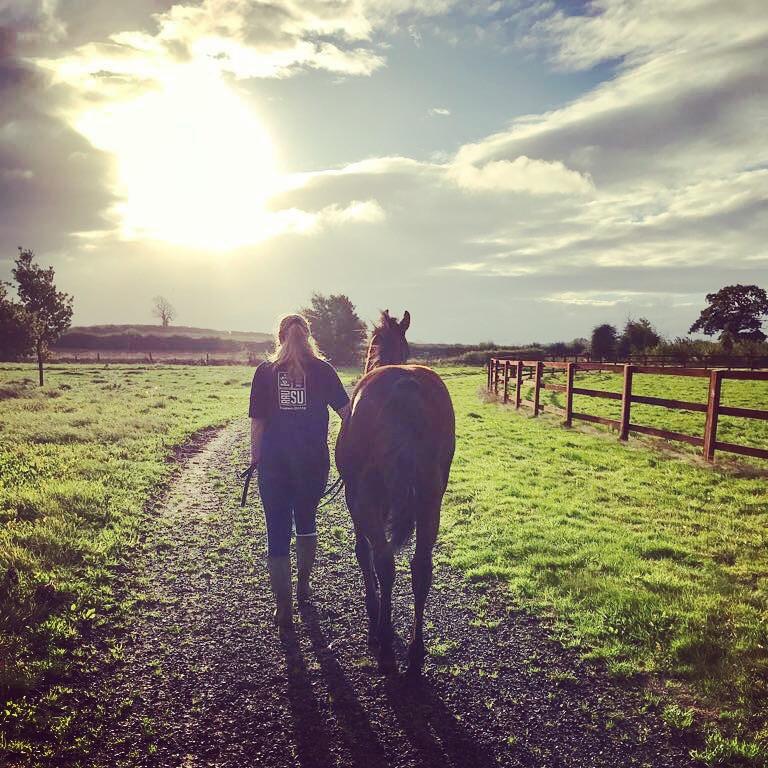 horse and sunset.jpg