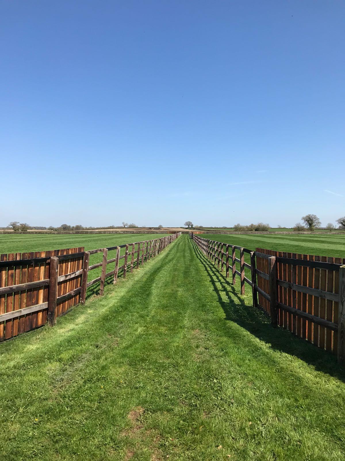 grass and fields.jpg