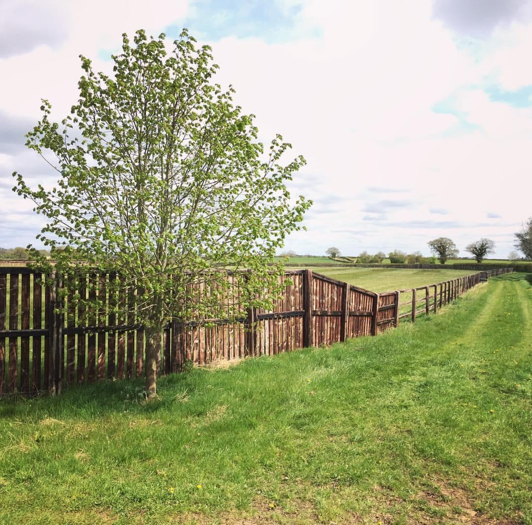 tree and fence.JPG