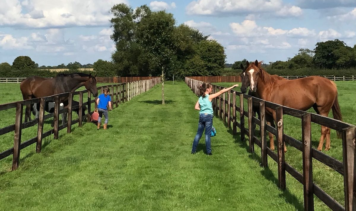 kids and horses.jpg