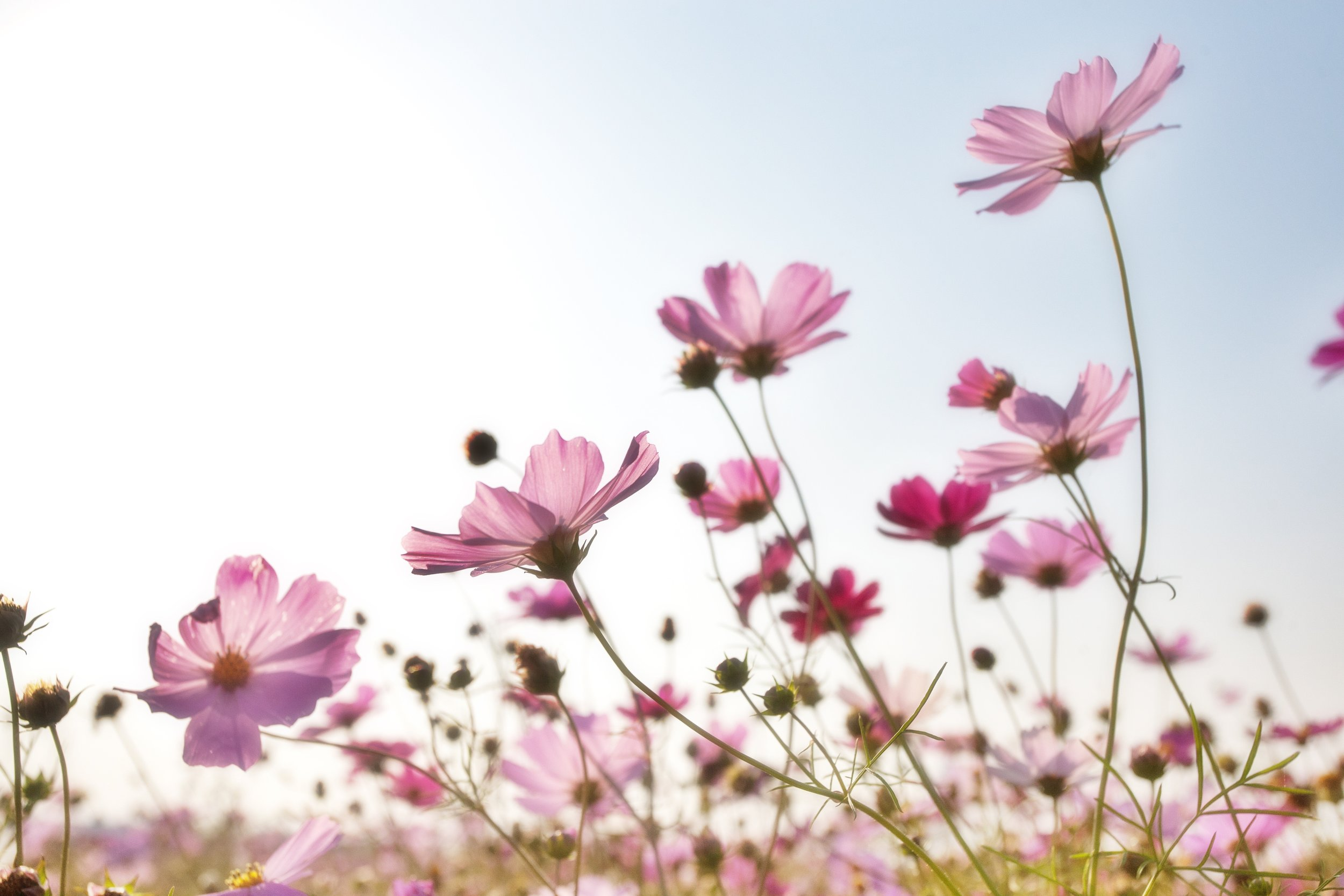 background-bloom-blooming-158756.jpg