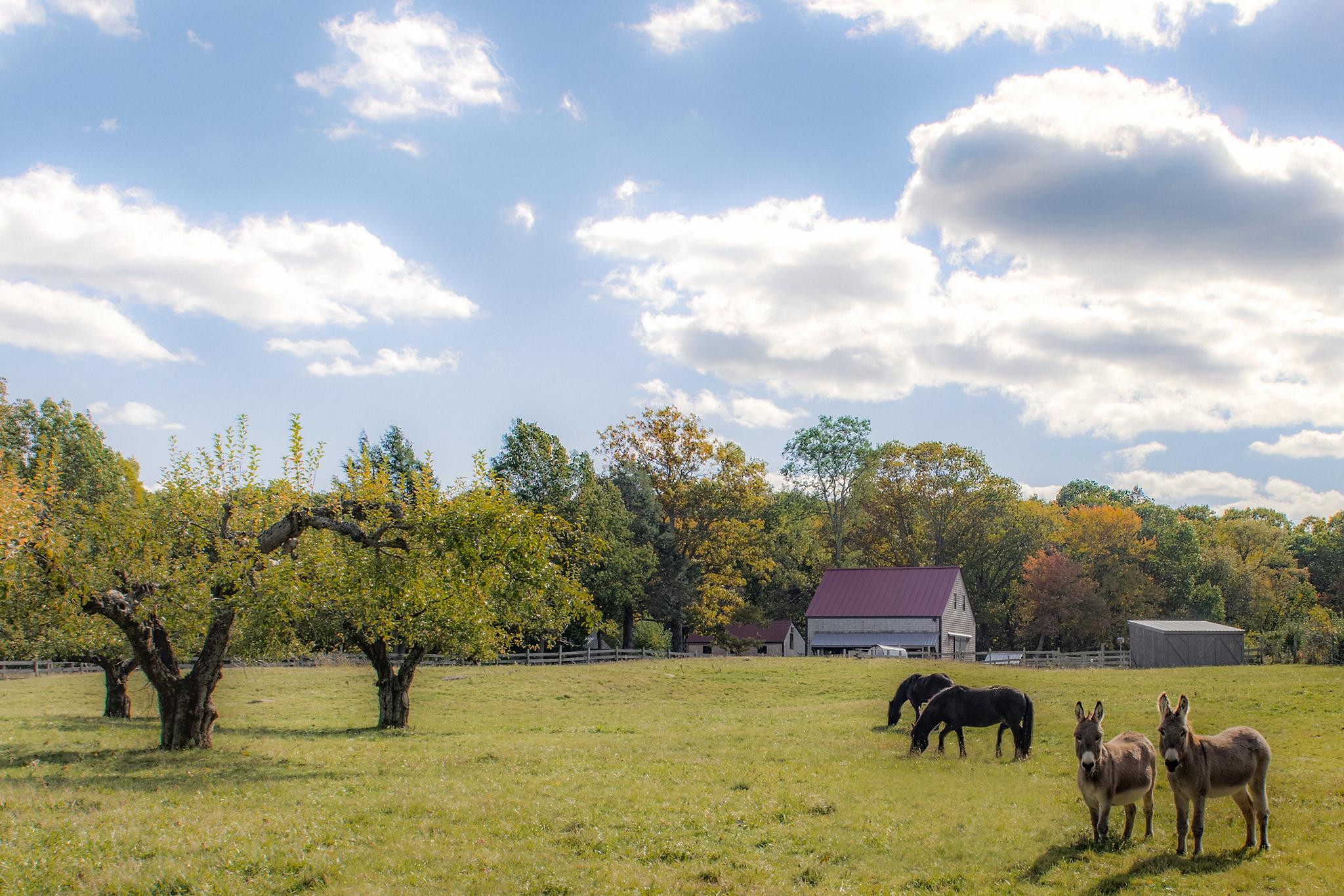 FarmfieldWEB.jpg