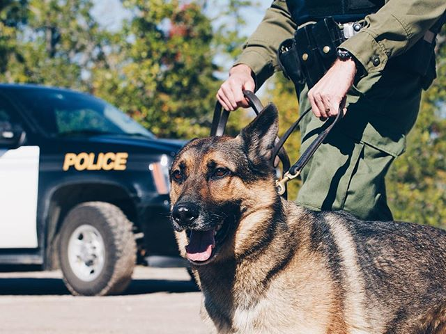 We're thankful for the men and women who serve and protect, but also the K9's who serve with them! To every first responder with a pet as a partner, give them a few extra treats today and let them know they're appreciated!