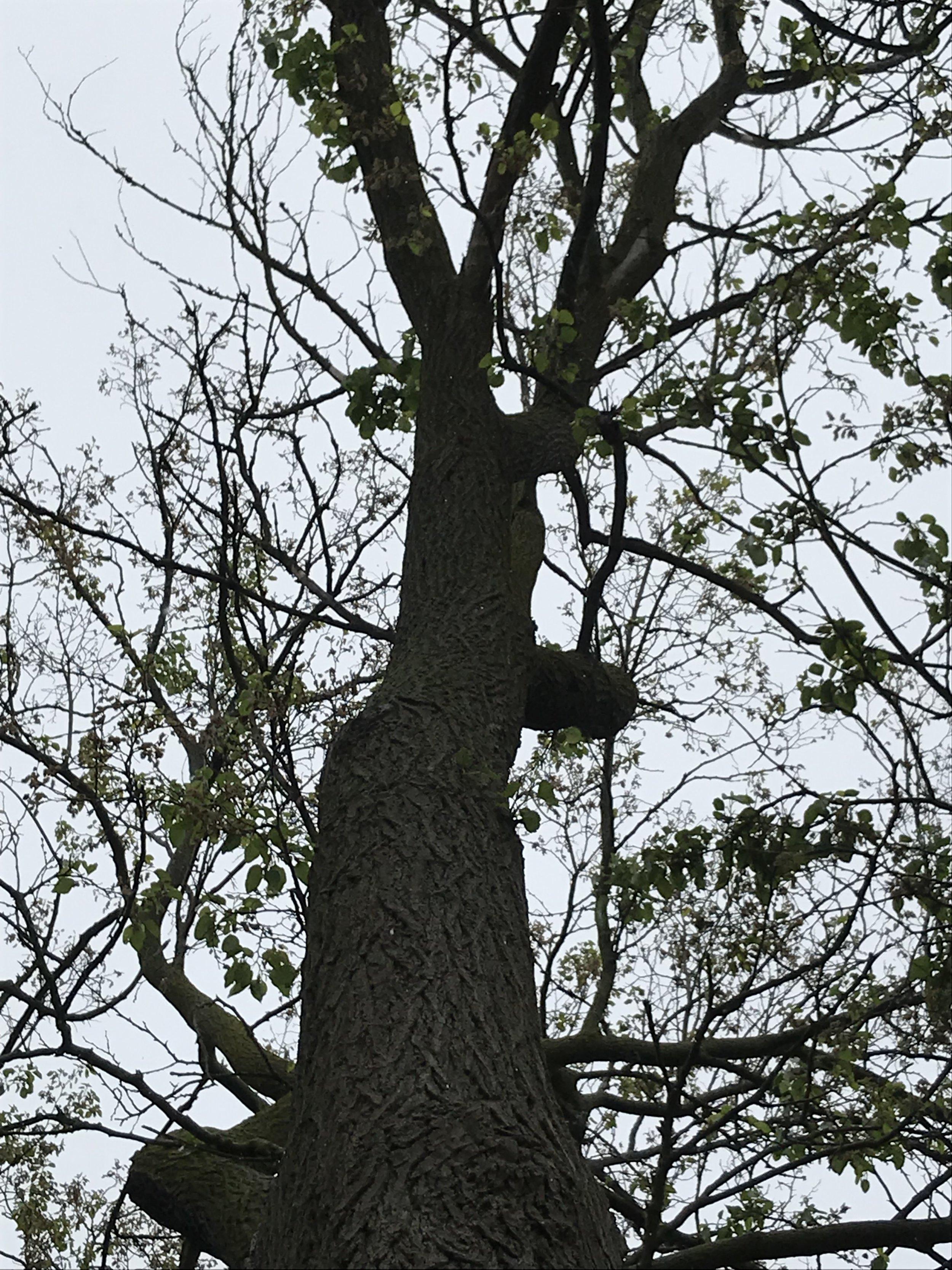 dying tree.jpg