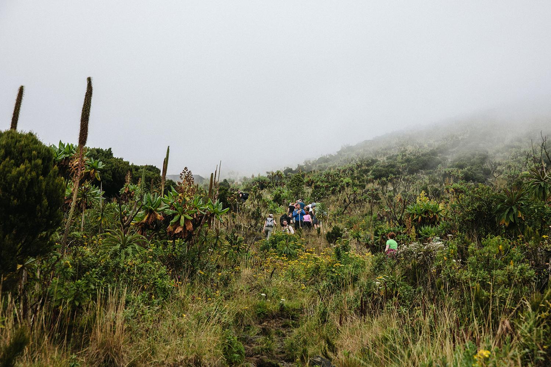 DRC_Virunga_Sasithon_0009.jpg