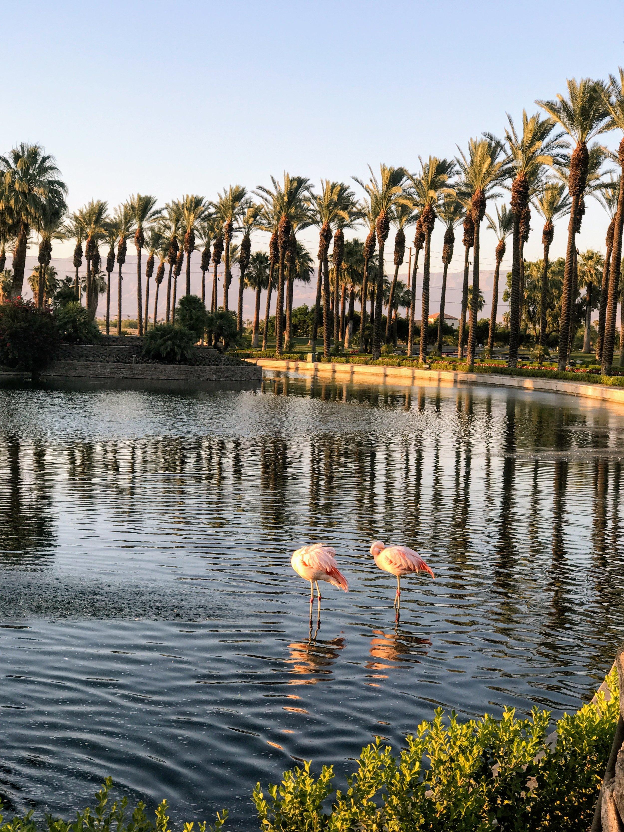 Flamingos @ the Resort