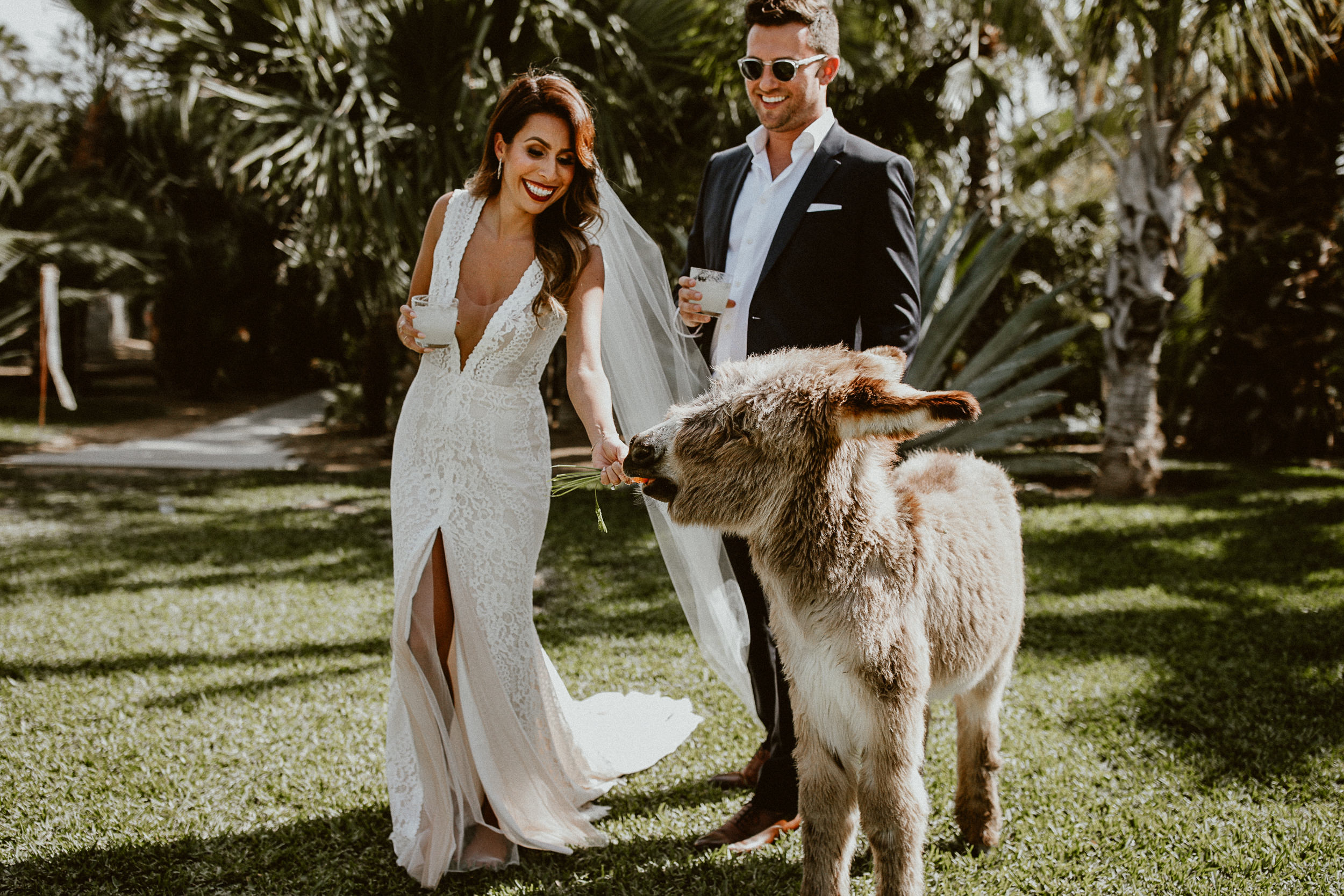 Burrito the Baby Donkey at ACRE in Los Cabos Mexico. Fun Bride + Groom Photo from Everyday Pursuits Wedding.