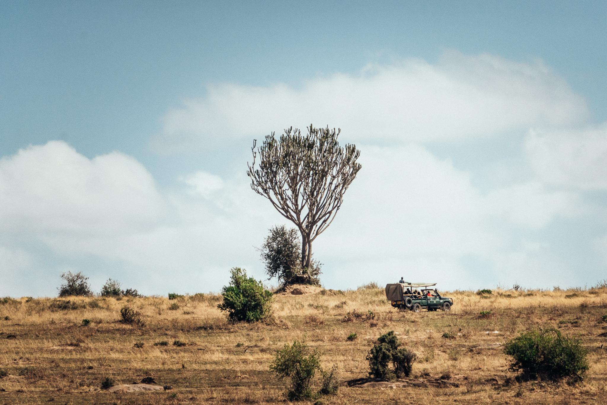 Land Cruiser on Safari in Kenya Ph. David Krugman