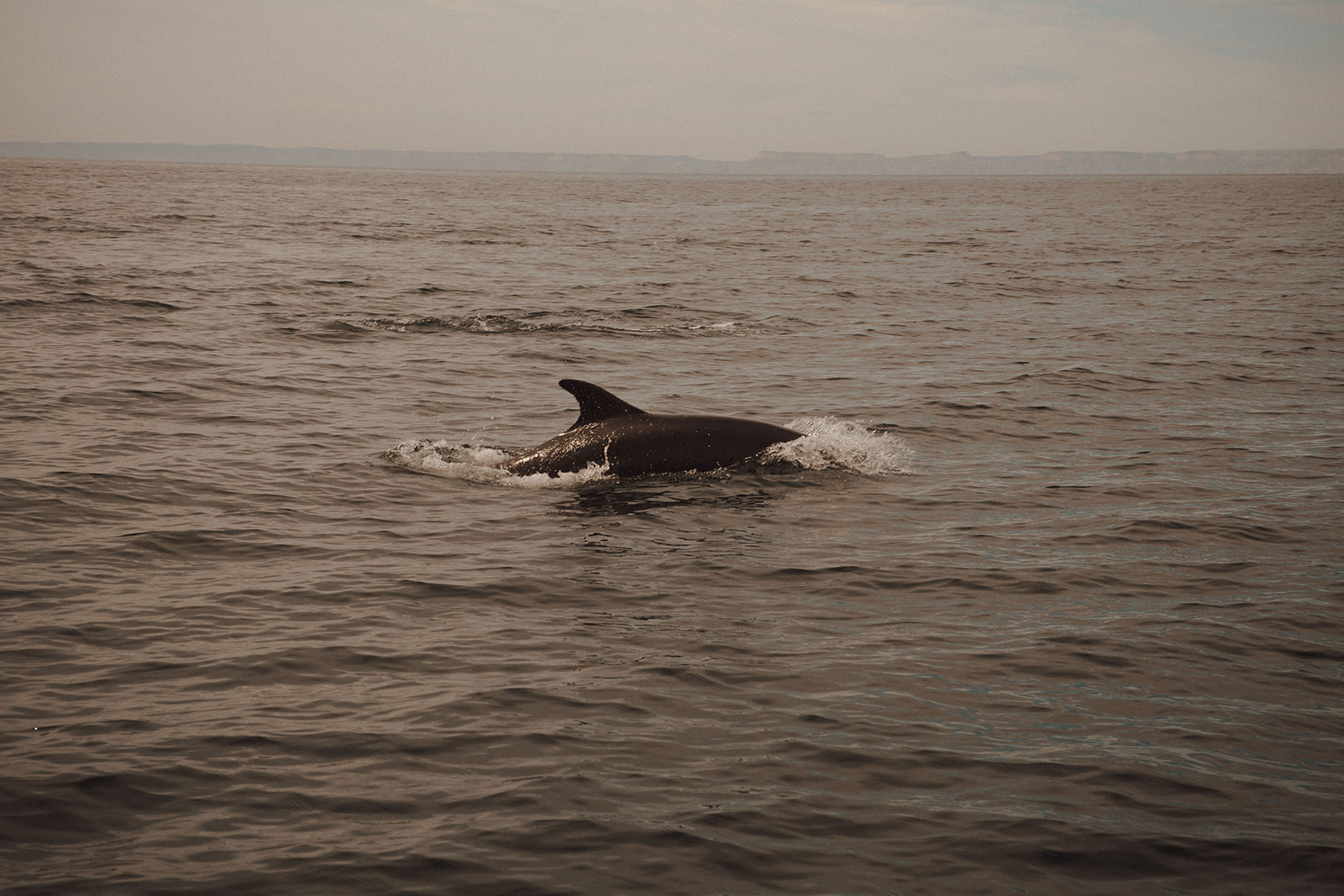 Dolphin Spotting in the Sea of Cortez