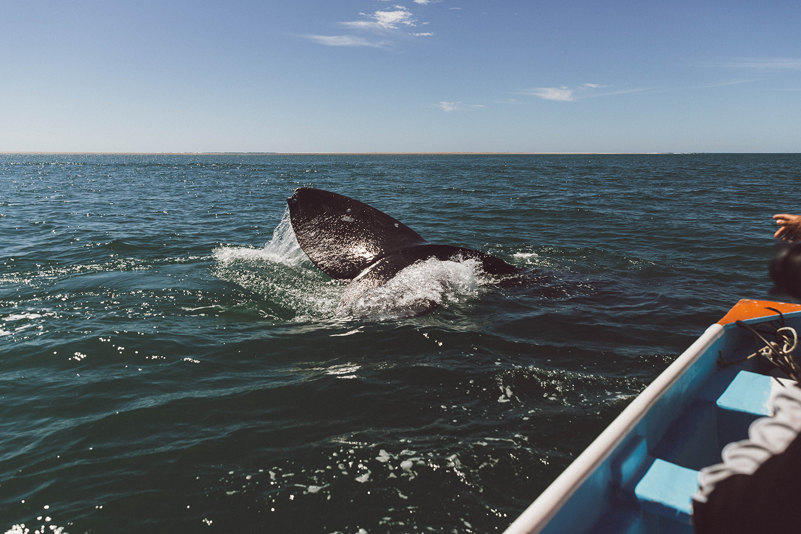 Whale Watching in Magdalena Bay