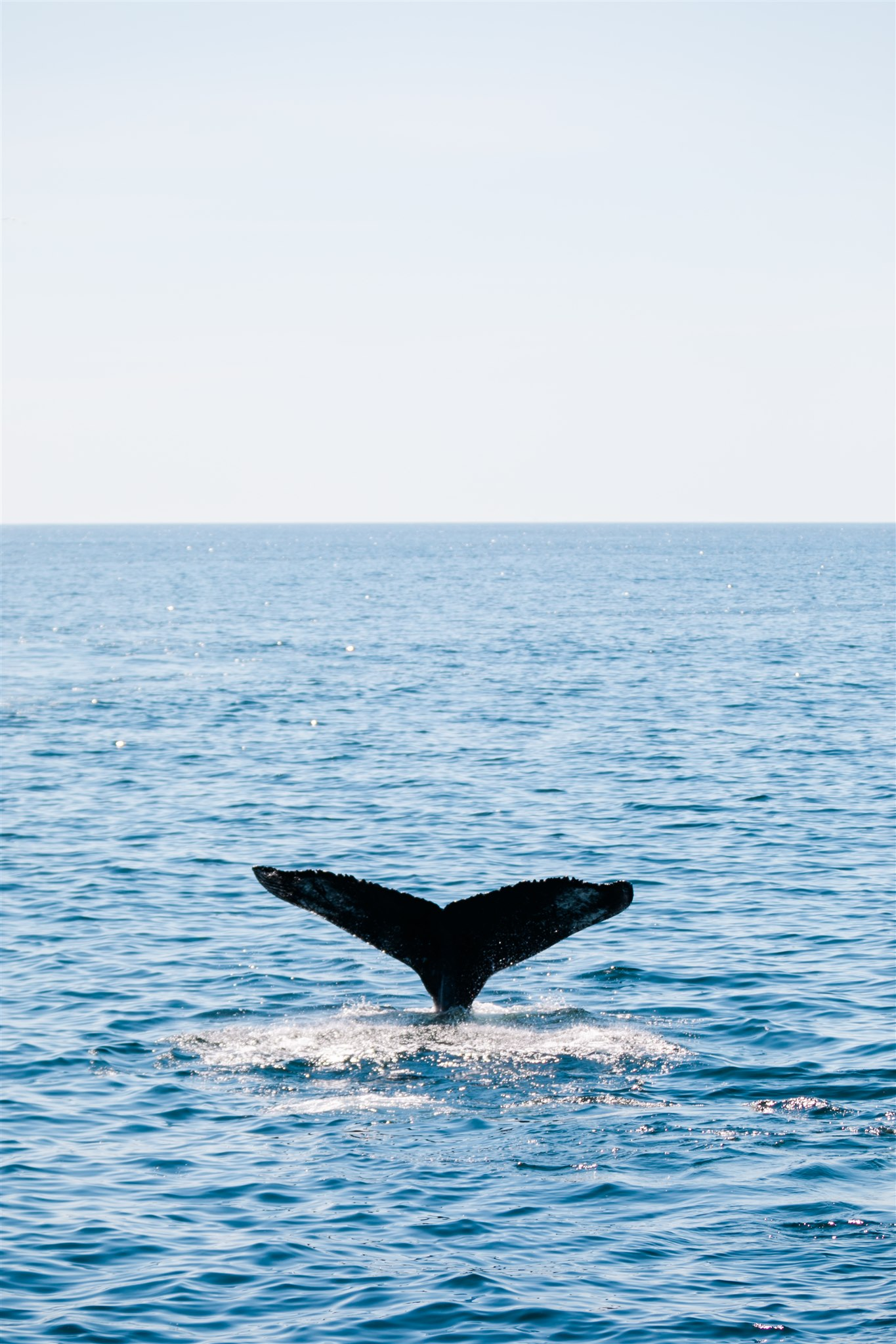 Whale Watching in Ptown, Cape Cod with IFAW + Kin Travel