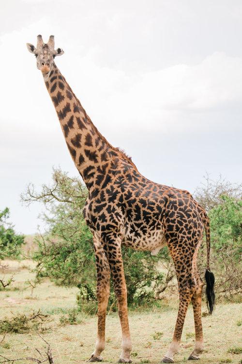 KENYA SAFARI WITH KIN TRAVEL -