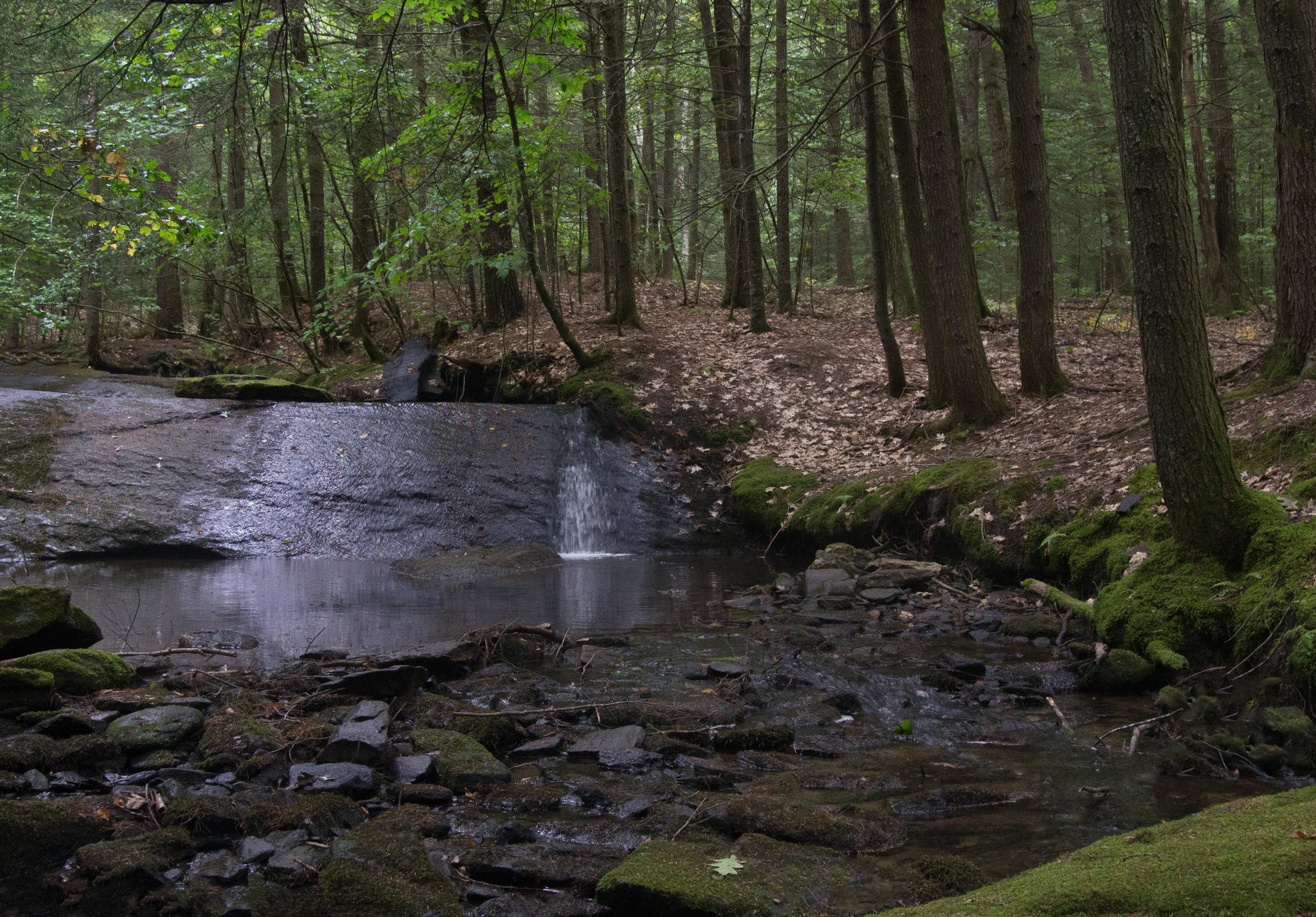 Rines Forest (Steve Thomas) 3.jpg