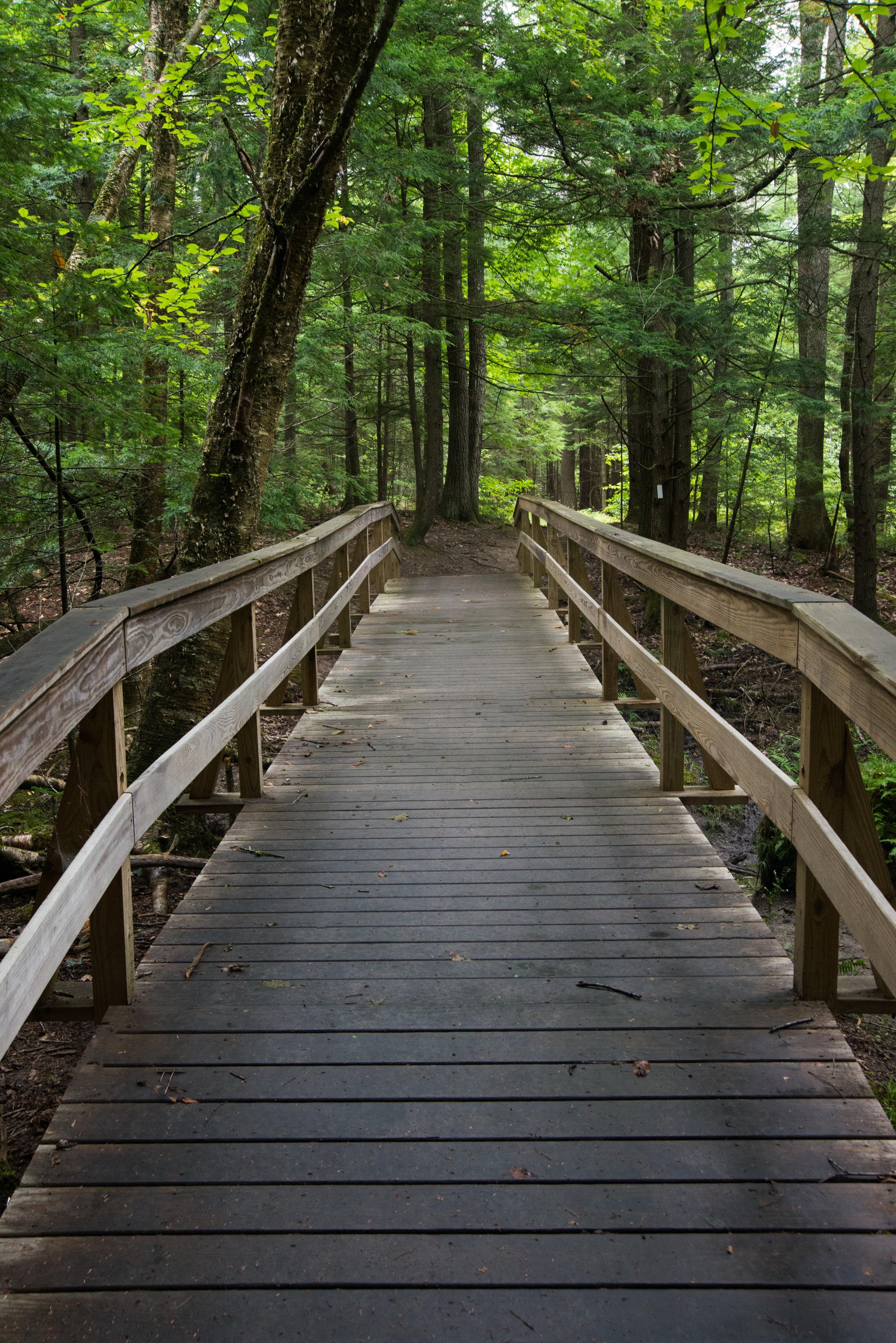 Rines Forest (Steve Thomas) 2.jpg
