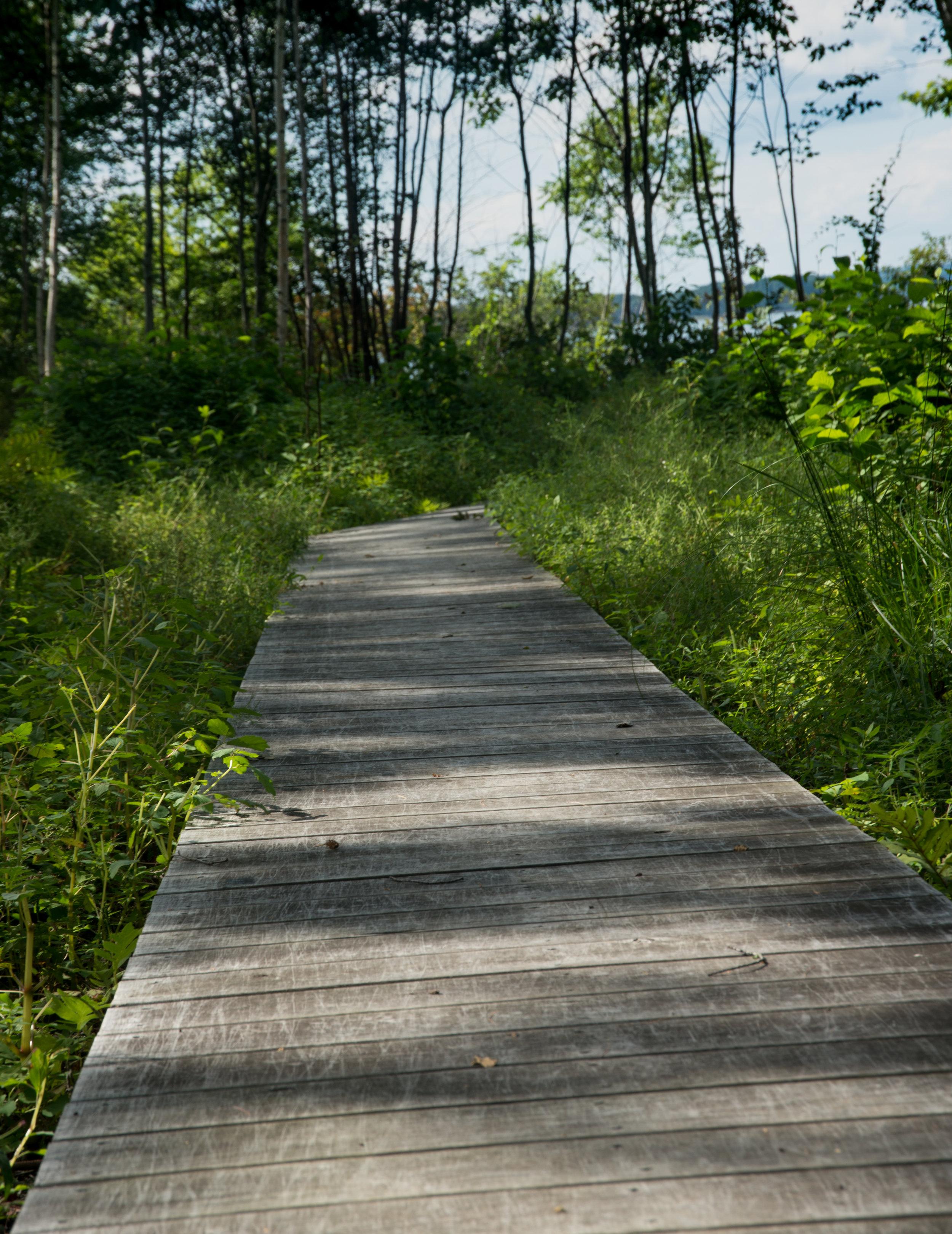 Gray Path (Steve Thomas) 4.jpg