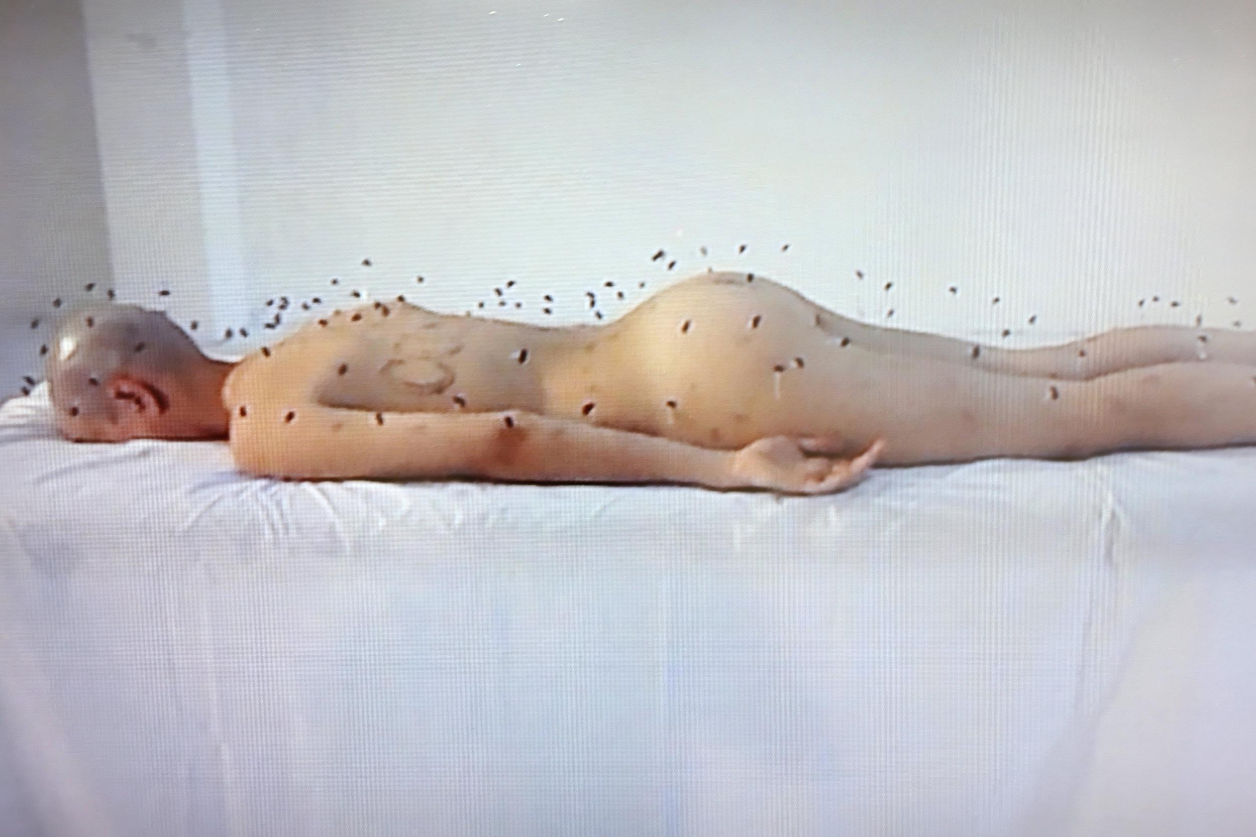 Marina Barsy Janer / (Detalle) Dermis Comunal:Transmutación de una epistemología colonial, 2015 / Video/Instalación / Medidas Variables