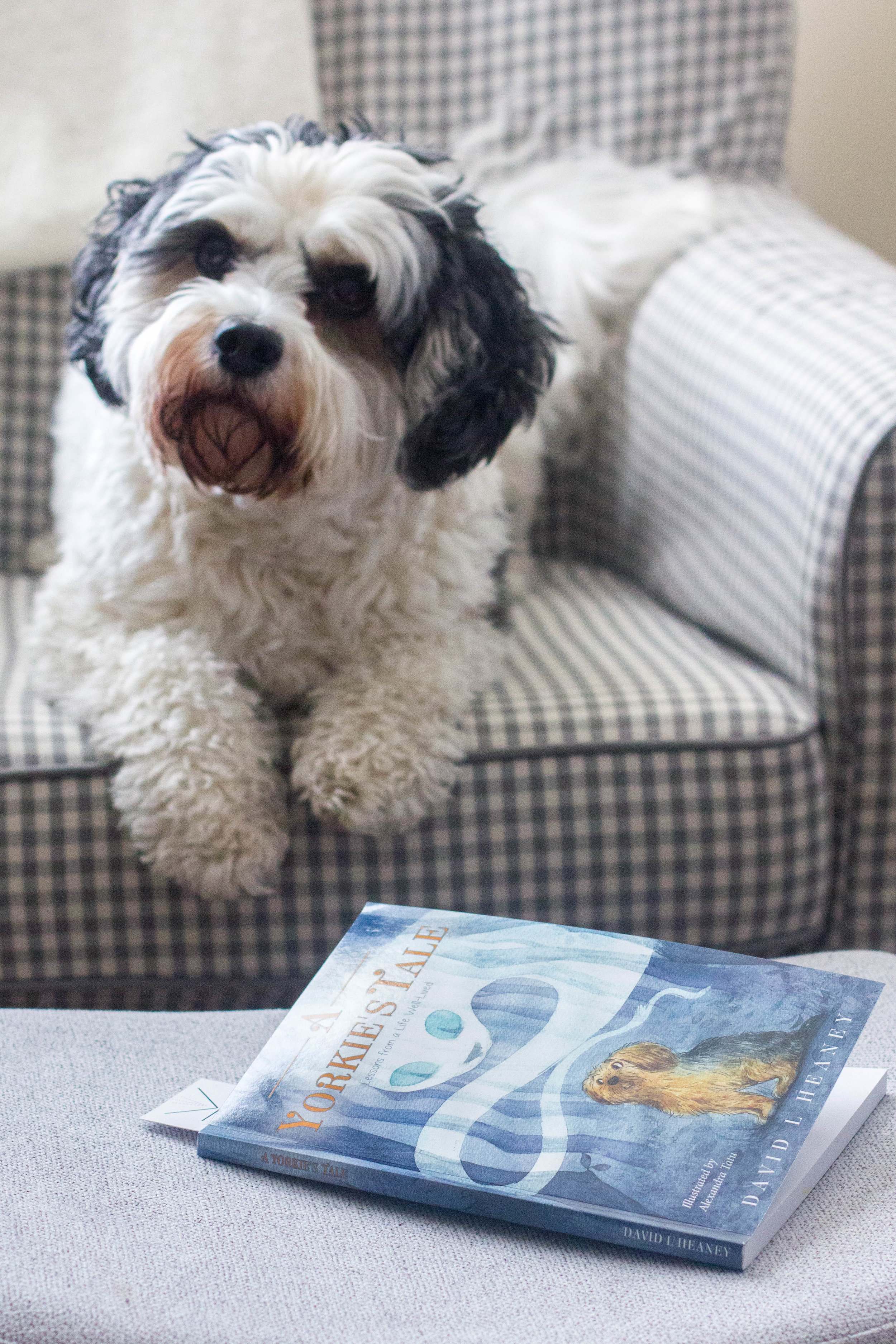 Reading A Yorkie's Tale by David Heaney at home with Huxley