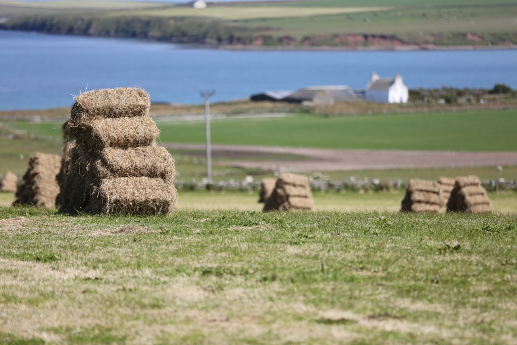 Stronsay, Orkney