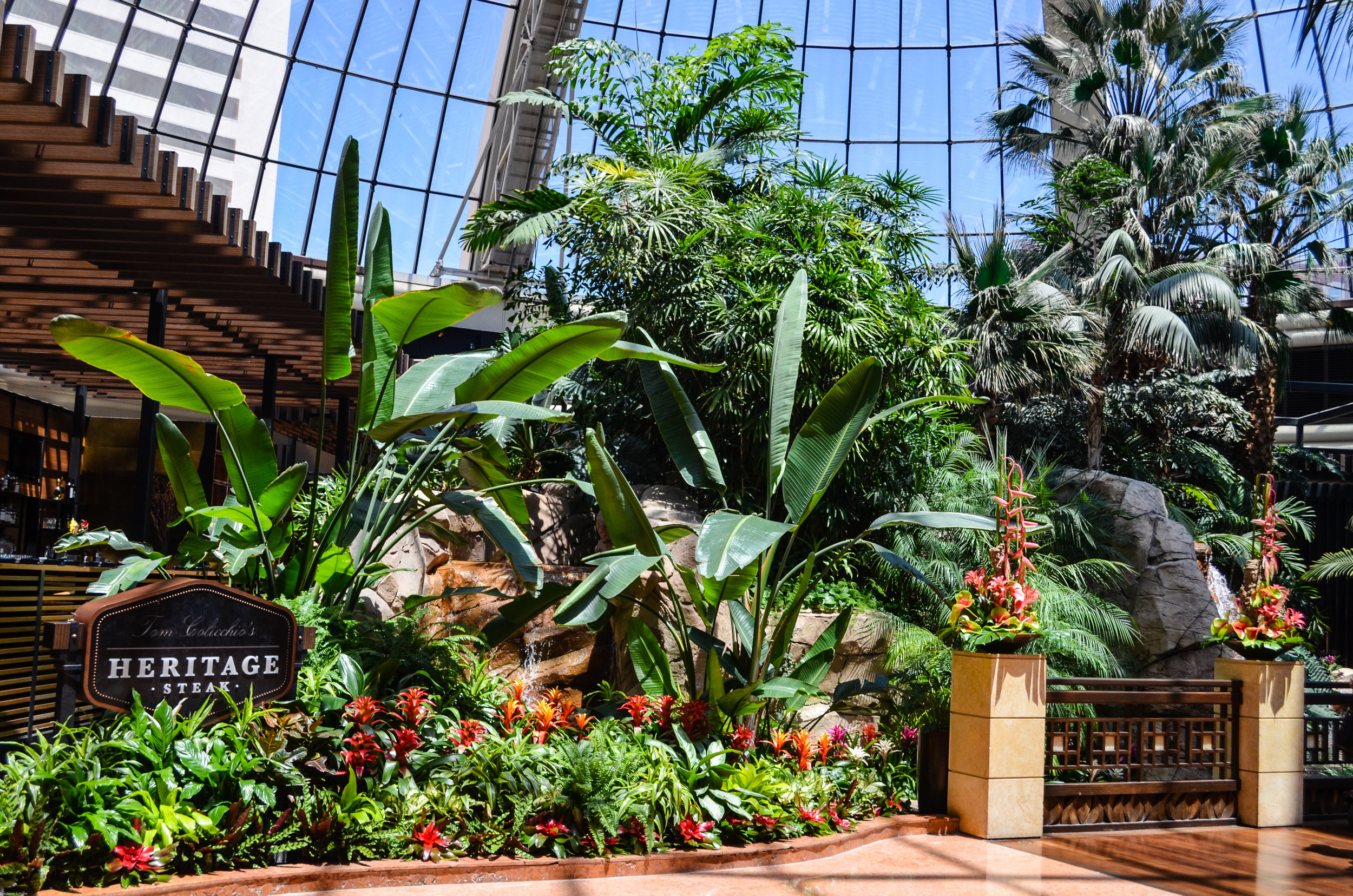 Part of the rainforest in the Mirage