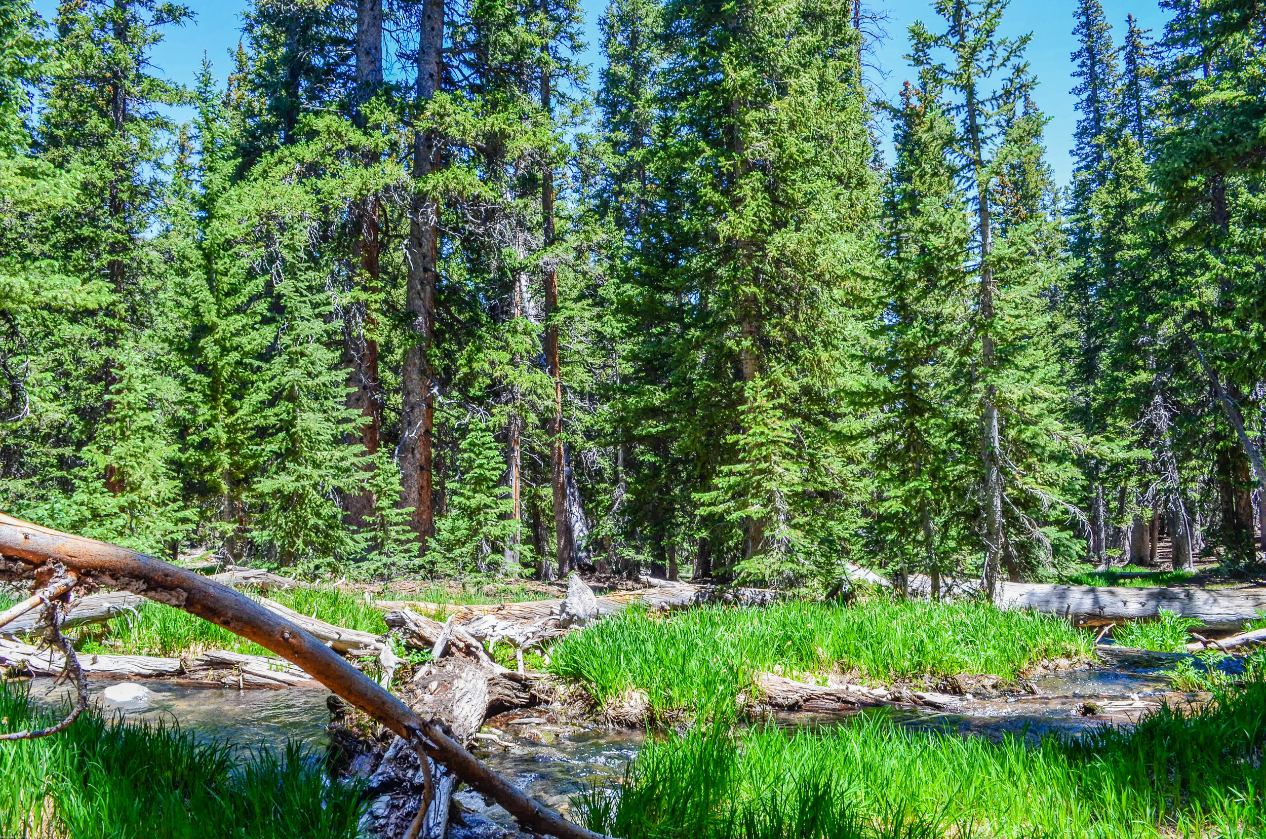 River and woods in Great Basin National Park