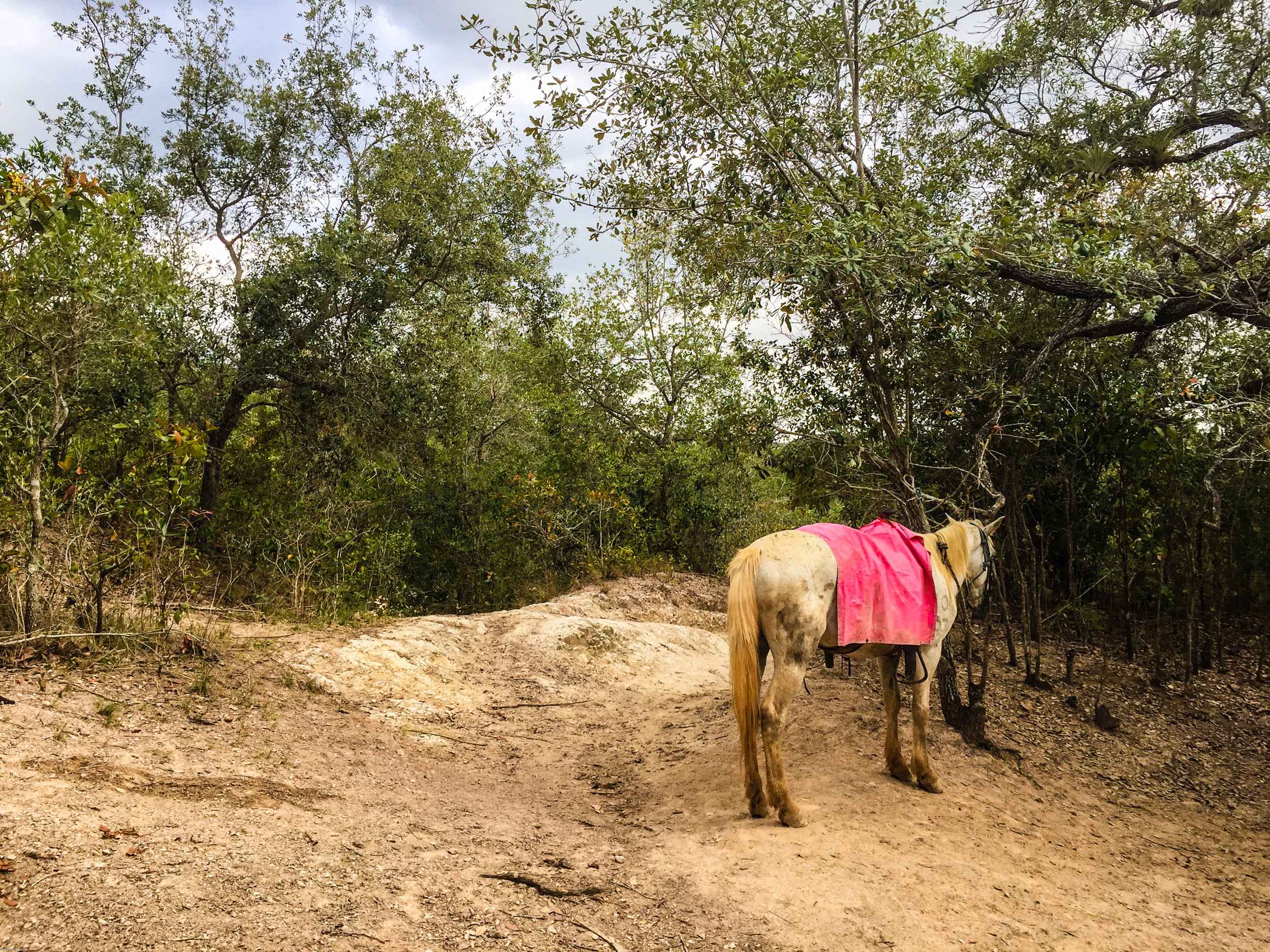 One gorgeous horse we found in Viñales