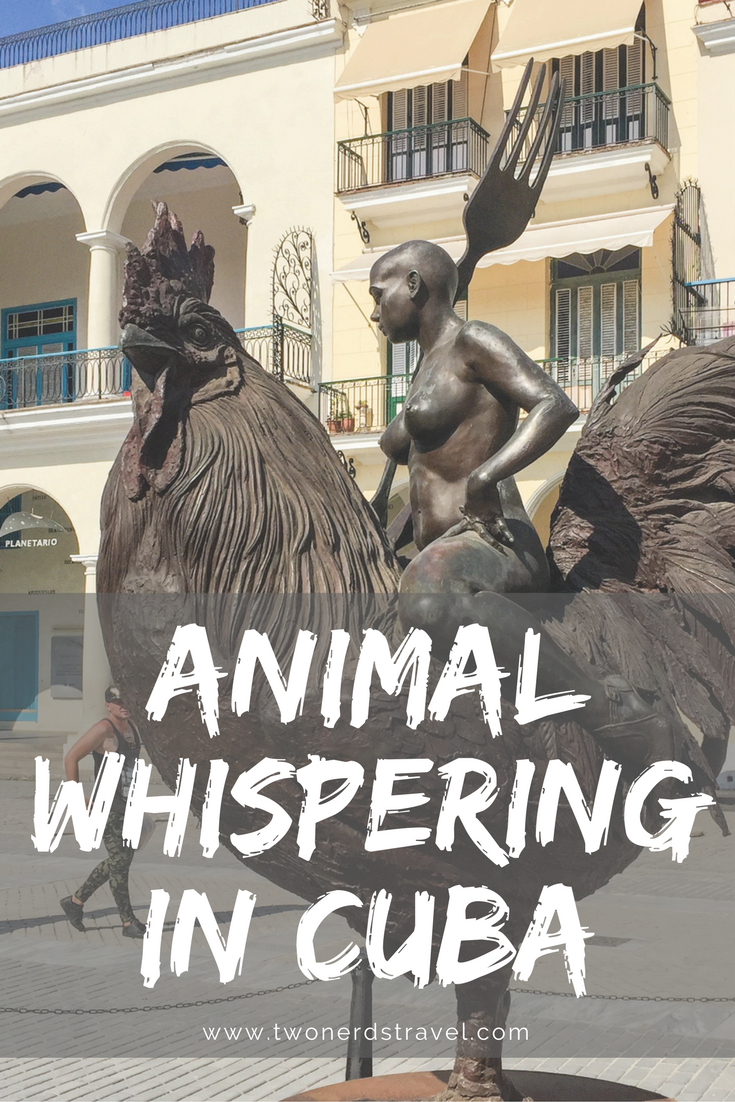 Cuba animal whisperer pin