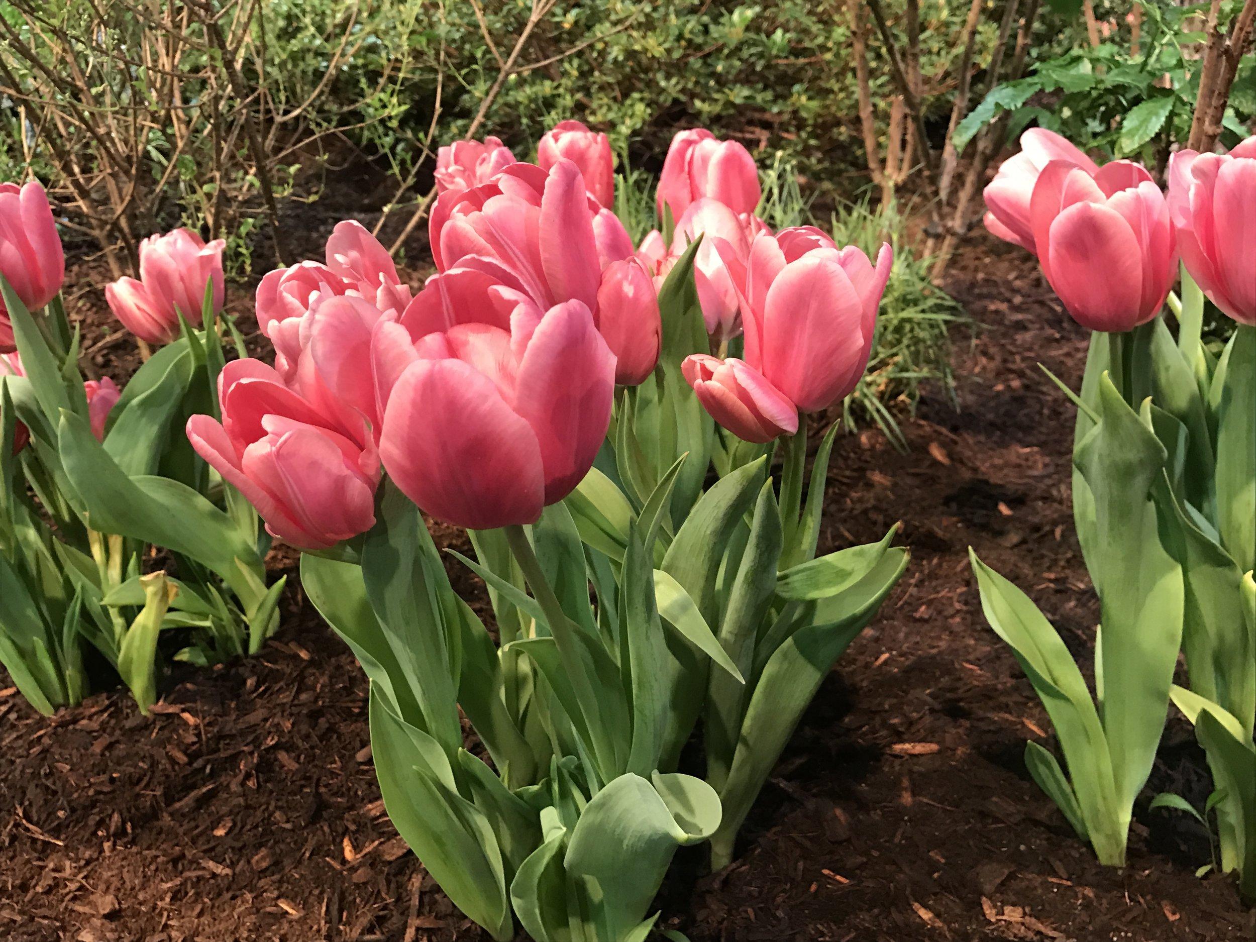 5 Landscape Design Ideas for Spring in Norfolk, MA