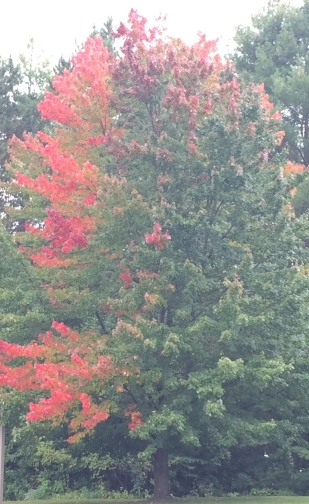 treeChanging.jpg