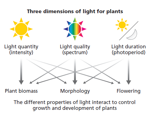 Three dimensions of light produce different impacts on plants, but researcher are also learning that there is interaction among the dimensions.