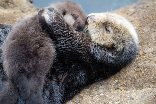Making a decision on your mental health can be very difficult. To help provide you comfort, here is a picture of a mommy and baby otter.