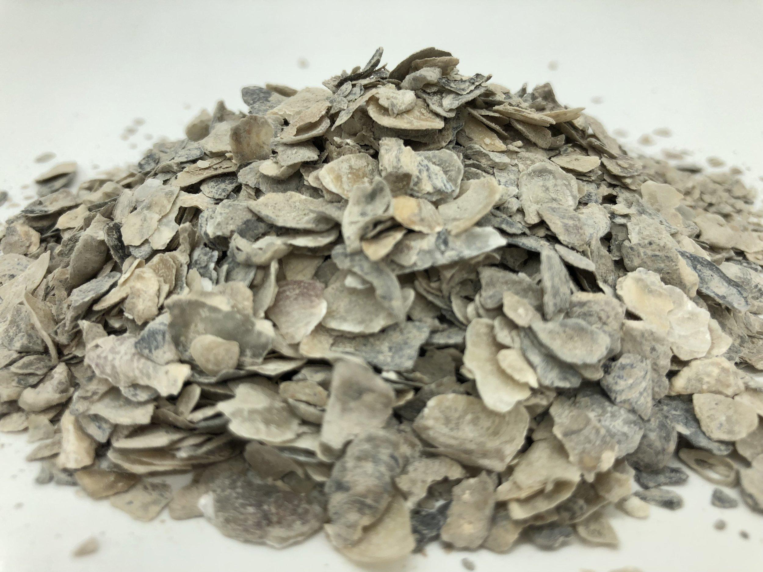 oyster shell.JPG