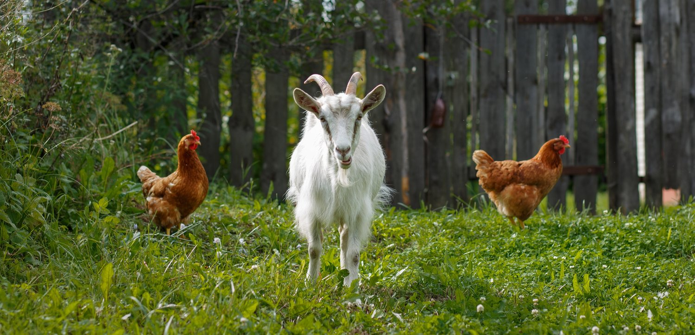 Custom-milled, high-quality feeds — Union Point Custom Feeds