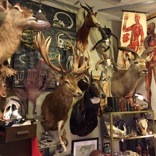 Taxidermy galore at Uncommon Objects