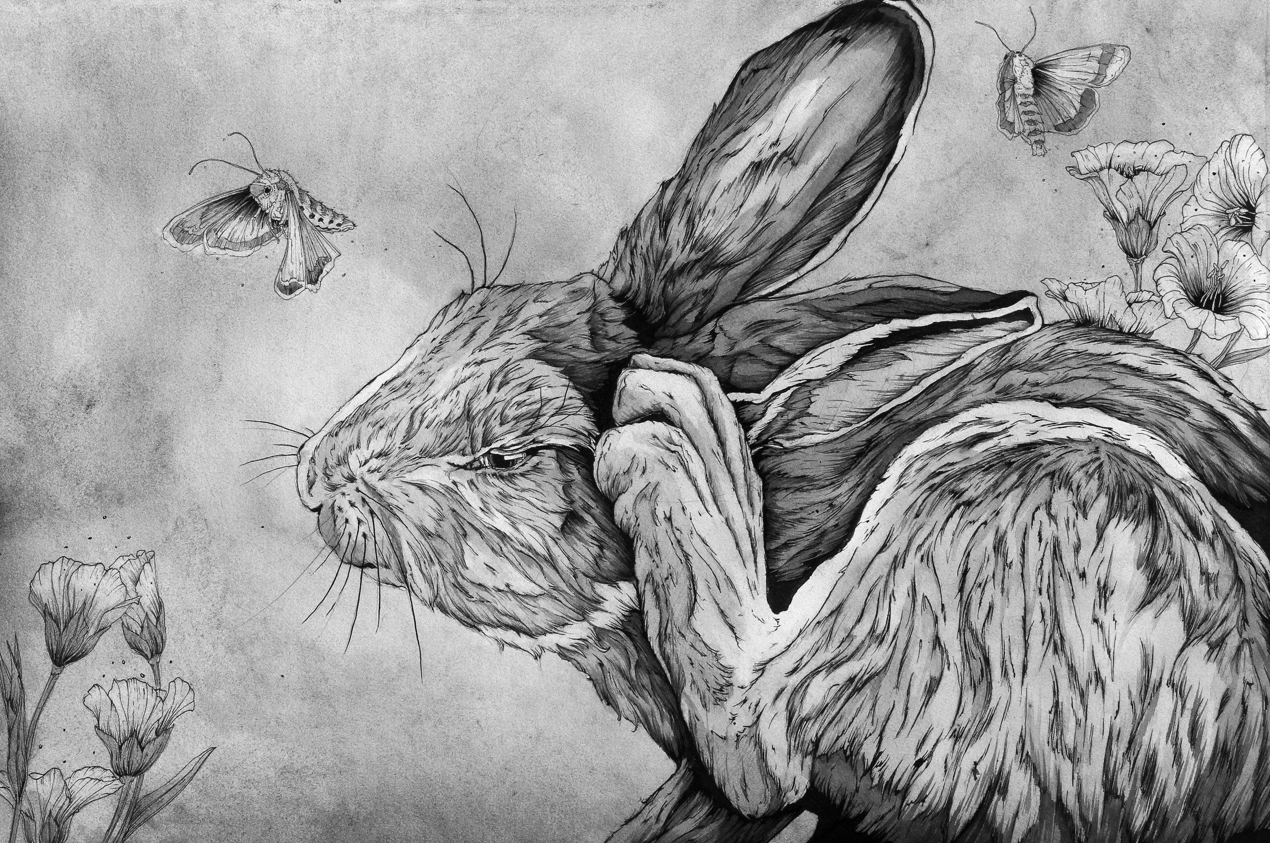 Rabbit in Flax.JPG