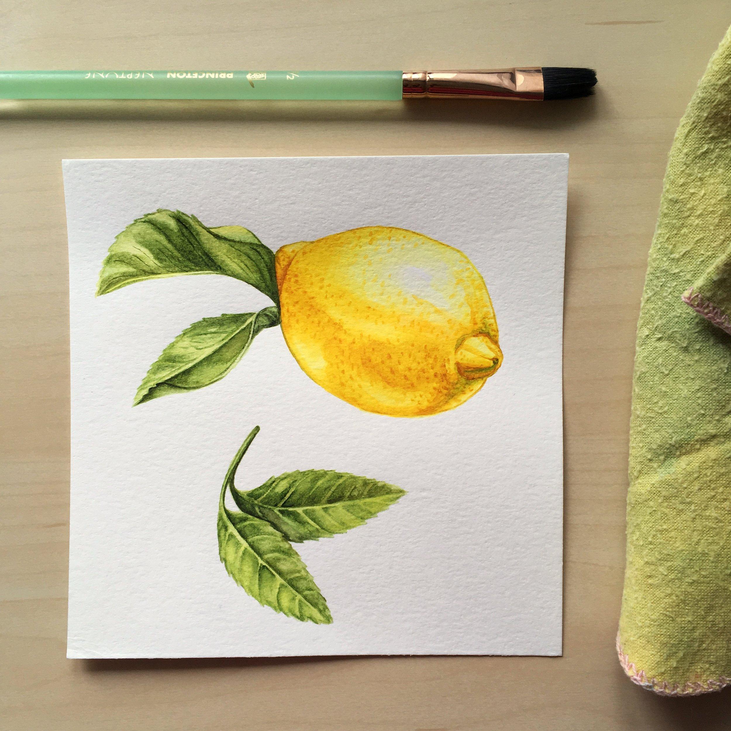 JosianneDufour_citrons_illustration_botanique.jpg
