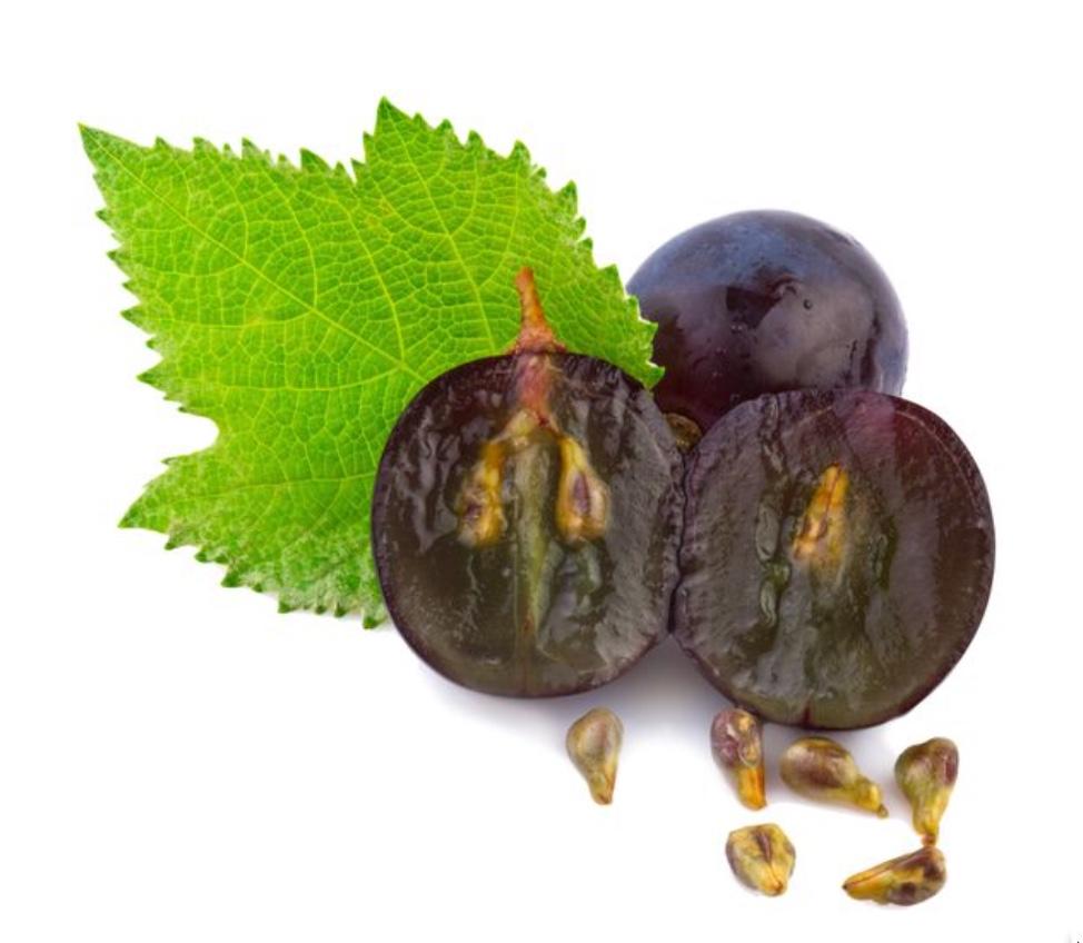 grapeseeds.jpeg