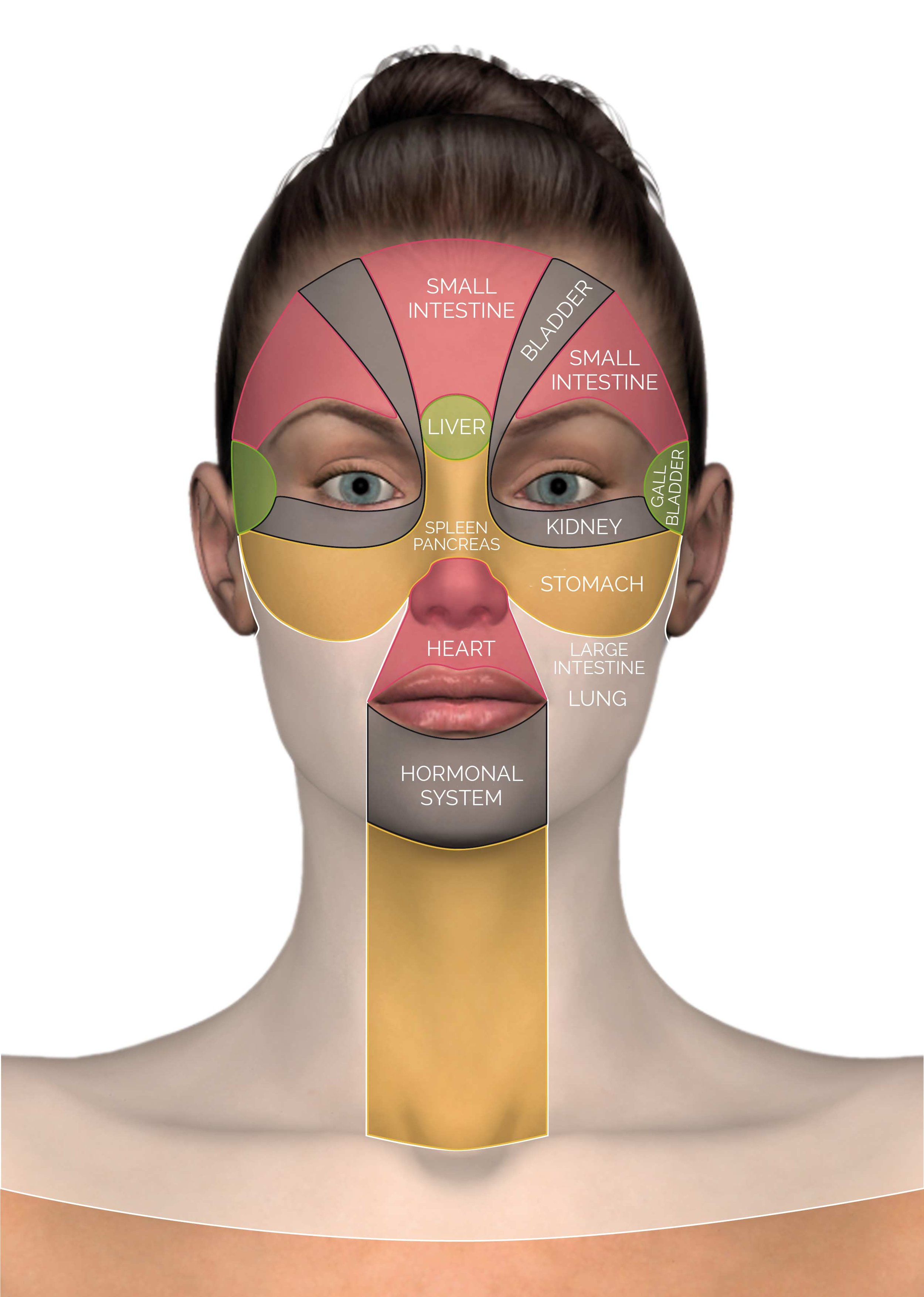 facial-reflex-zones.jpg