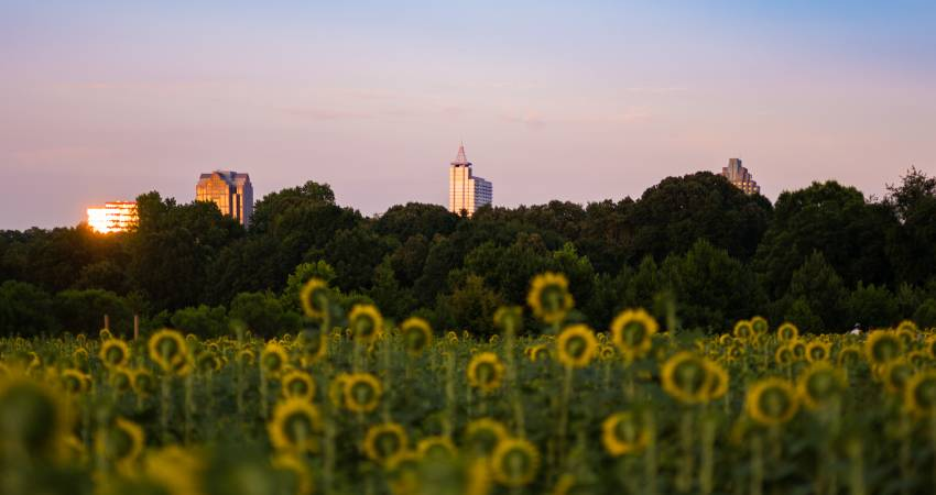 Photo courtesy of    VisitRaleigh