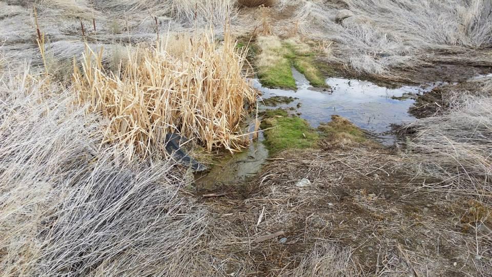 Wetlands Delineation