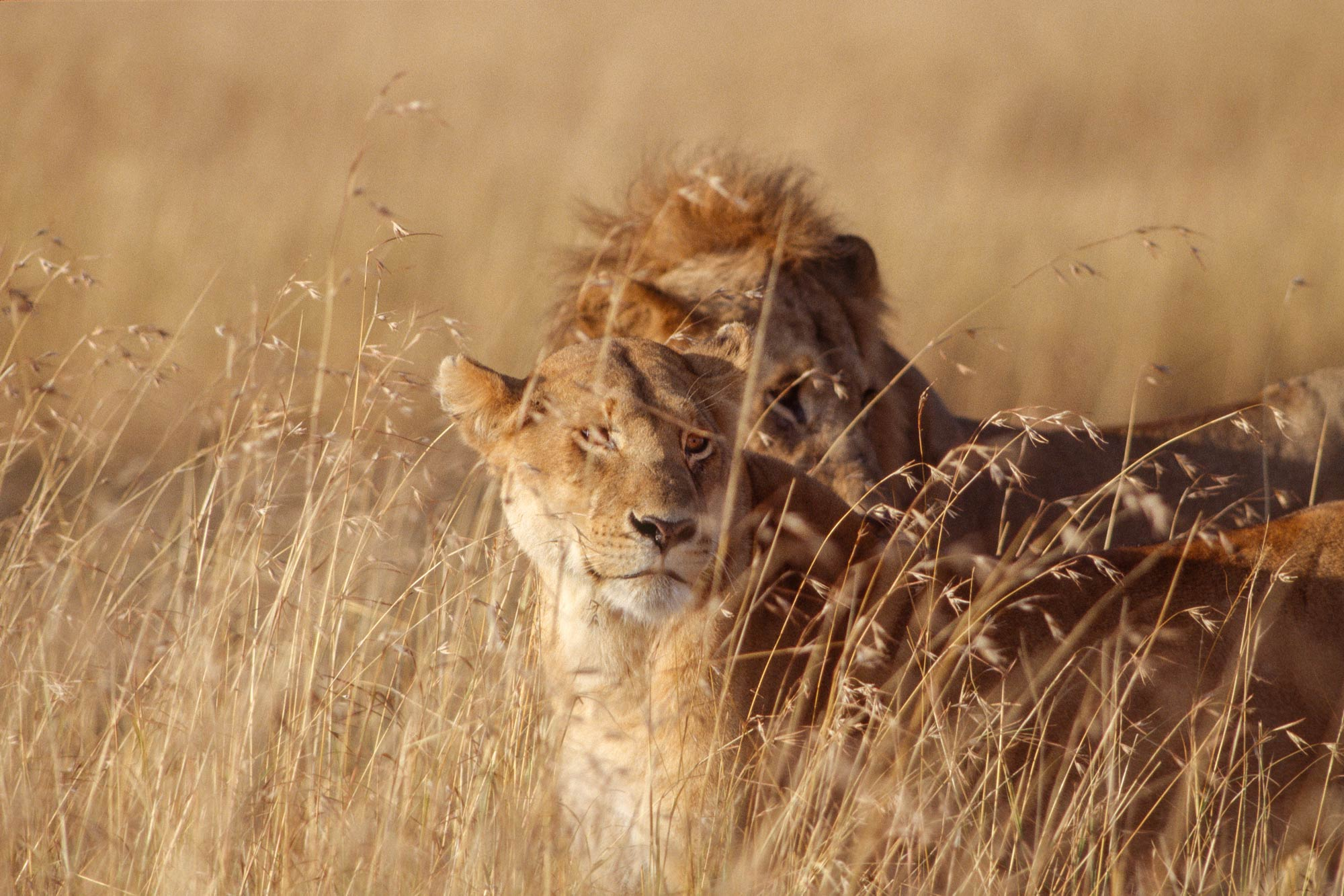 Wildlife-portraits_9.jpg