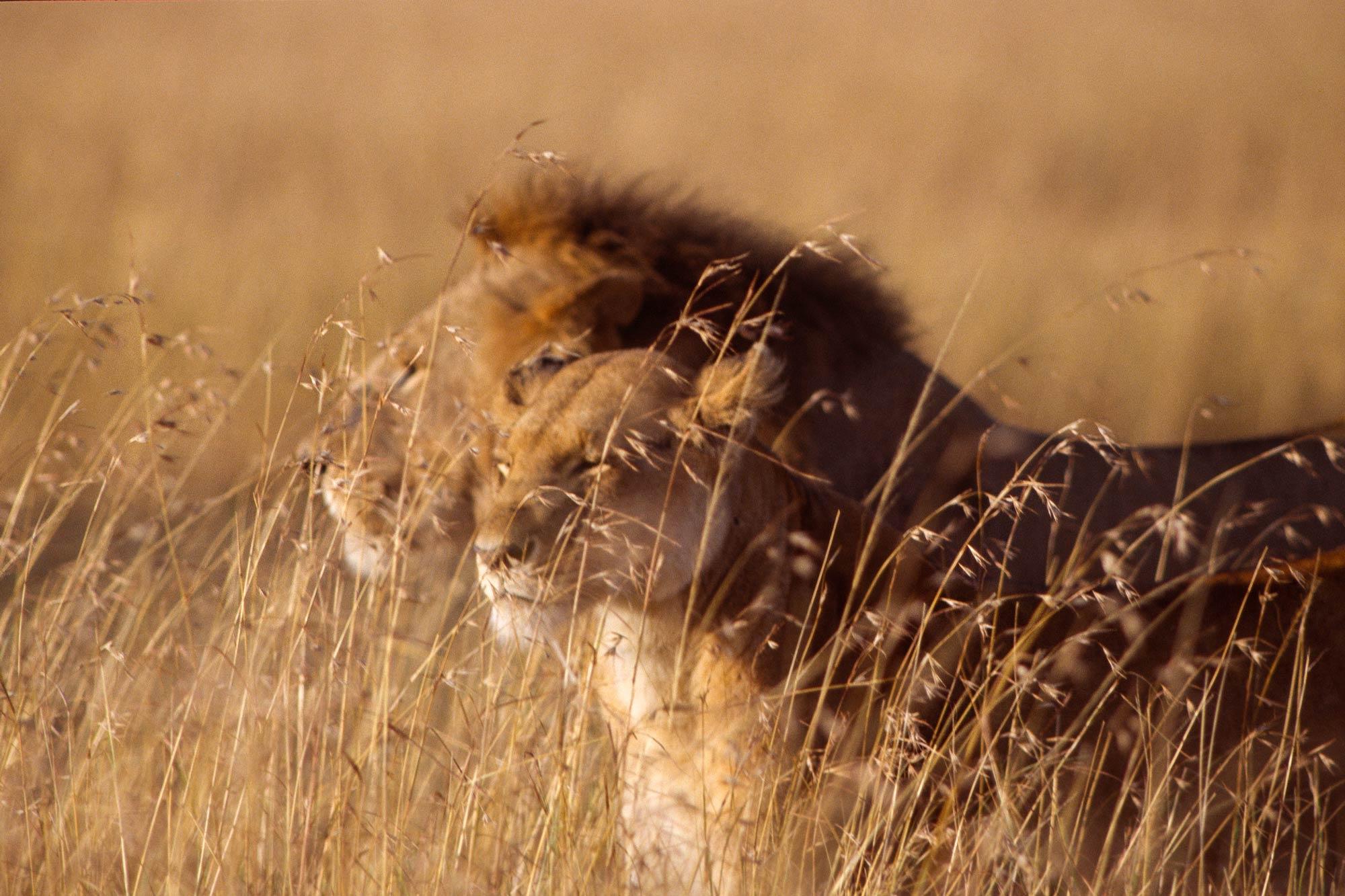 Wildlife-portraits_11.jpg