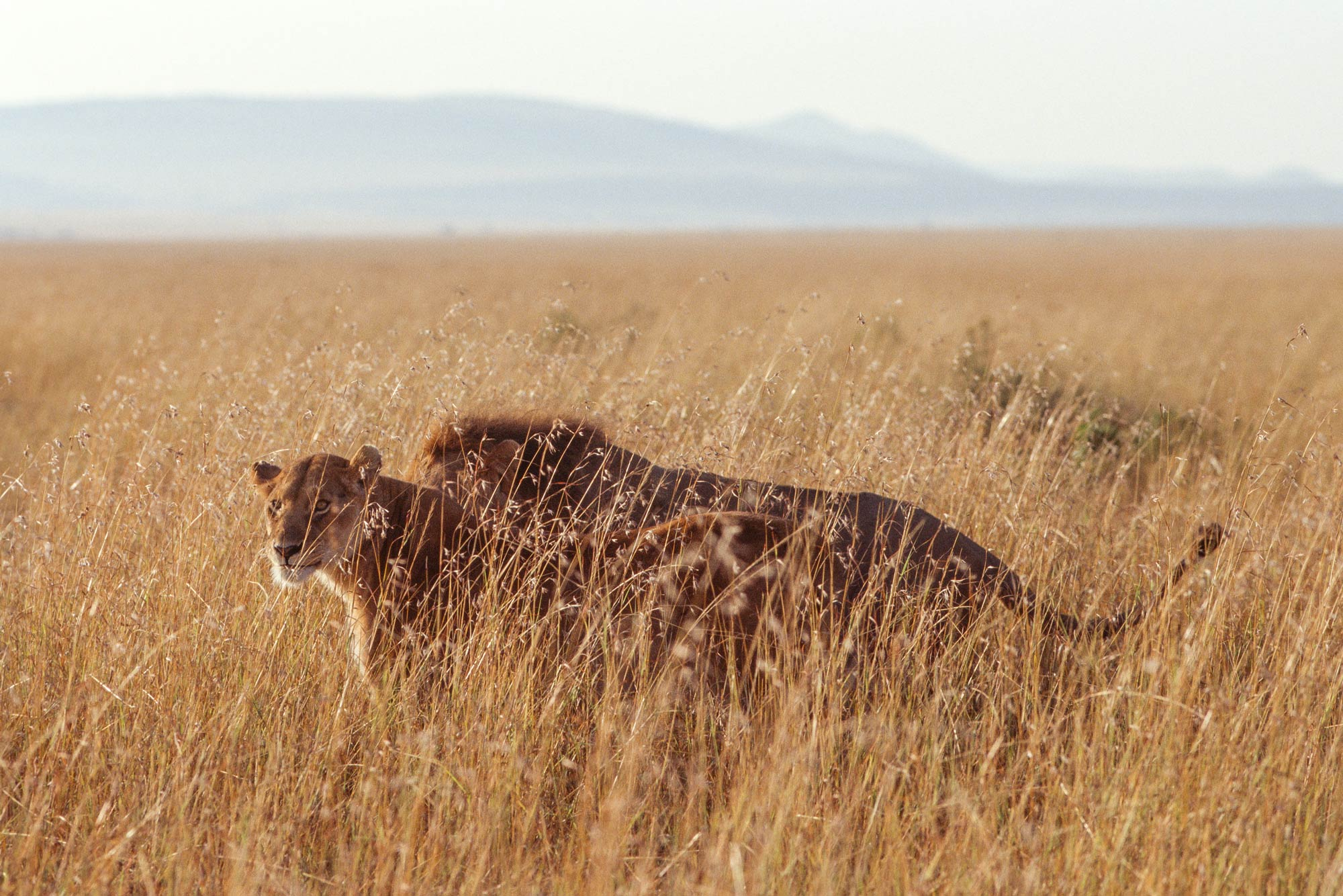 Wildlife-portraits_12.jpg