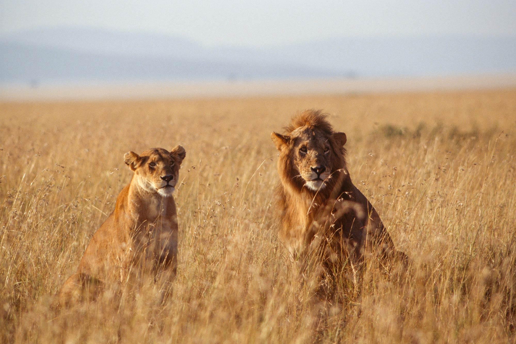 Wildlife-portraits_16.jpg