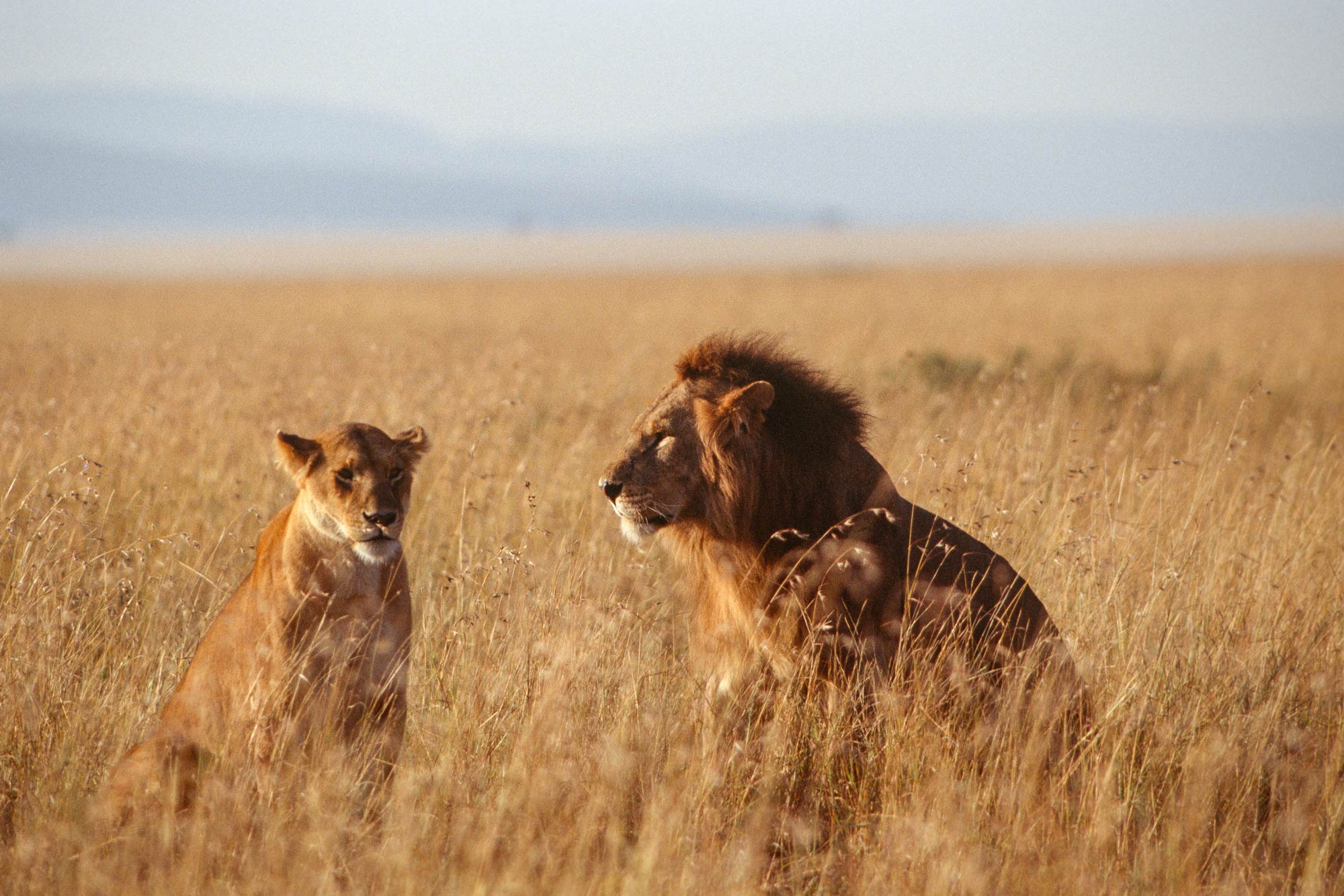 Wildlife-portraits_17.jpg