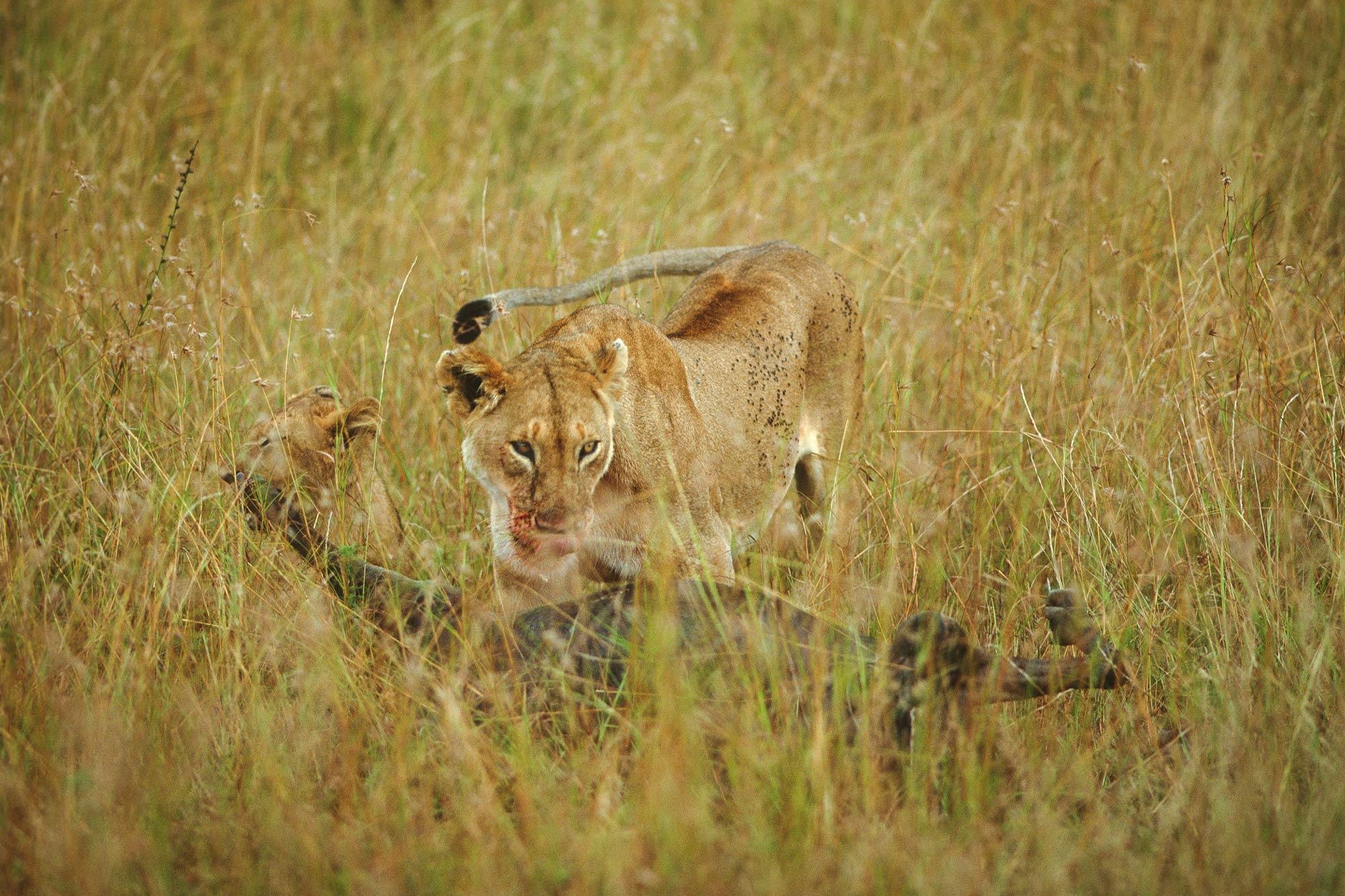 Wildlife-portraits_29.jpg