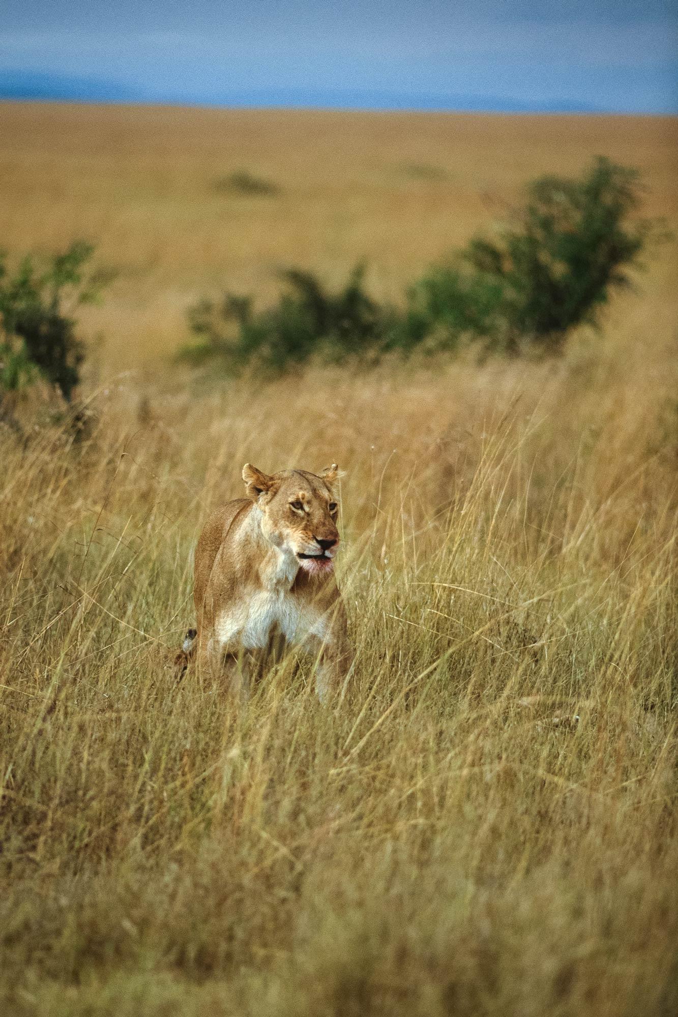 Wildlife-portraits_33.jpg